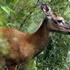 Kane County heading off fatal deer disease
