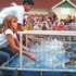 Ducks take their marks at DuPage County Fair