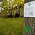 Arlington Heights neighborhood wants trees saved