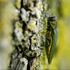 Palatine expects to spend $2.5 million coping with emerald ash borer