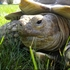 Reward offered for missing tortoise
