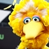 Debate thrusts Big Bird into presidential campaign