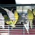 Club cares for 358 birds rescued from Aurora home