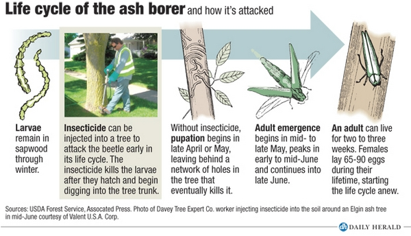 Streets Of Willow >> How the emerald ash borer is changing the suburban landscape
