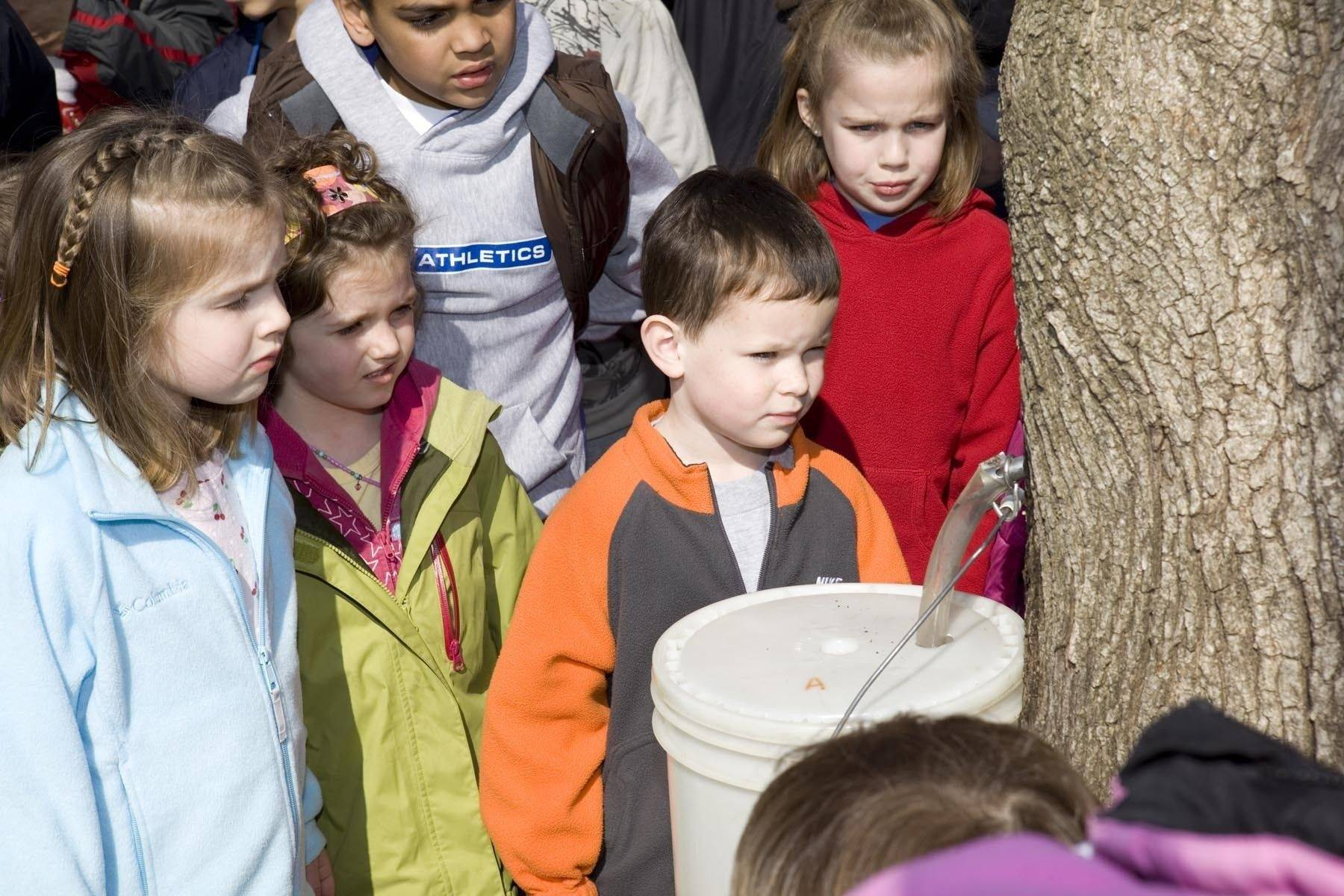 A group of young onlookers watches intently as sap is collected from a maple tree during last year's MapleFest at Red Oak Nature Center in Batavia.