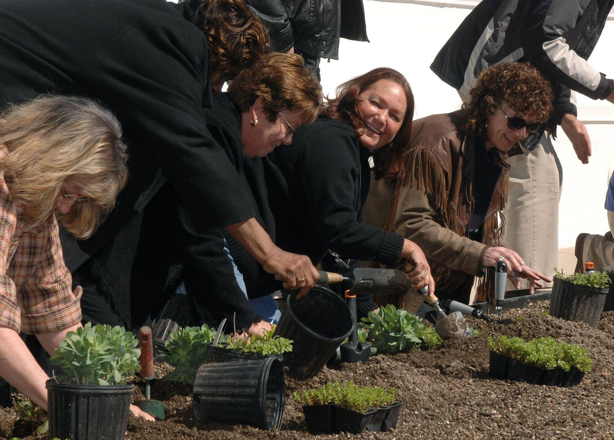 Lake County Board members plant perennials Friday on the green roof, one of several environmentally sensitive features at the county's new facility for planning, development and environmental services in Libertyville.