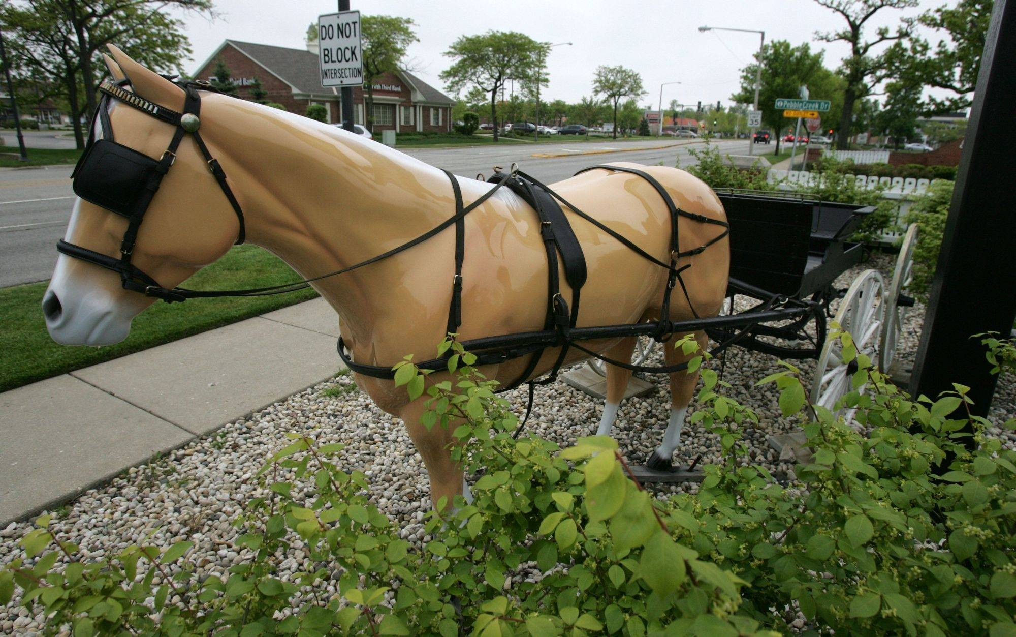 Horse and buggy in front of Ace Hardware on Waukegan Road in Glenview, May 2010.