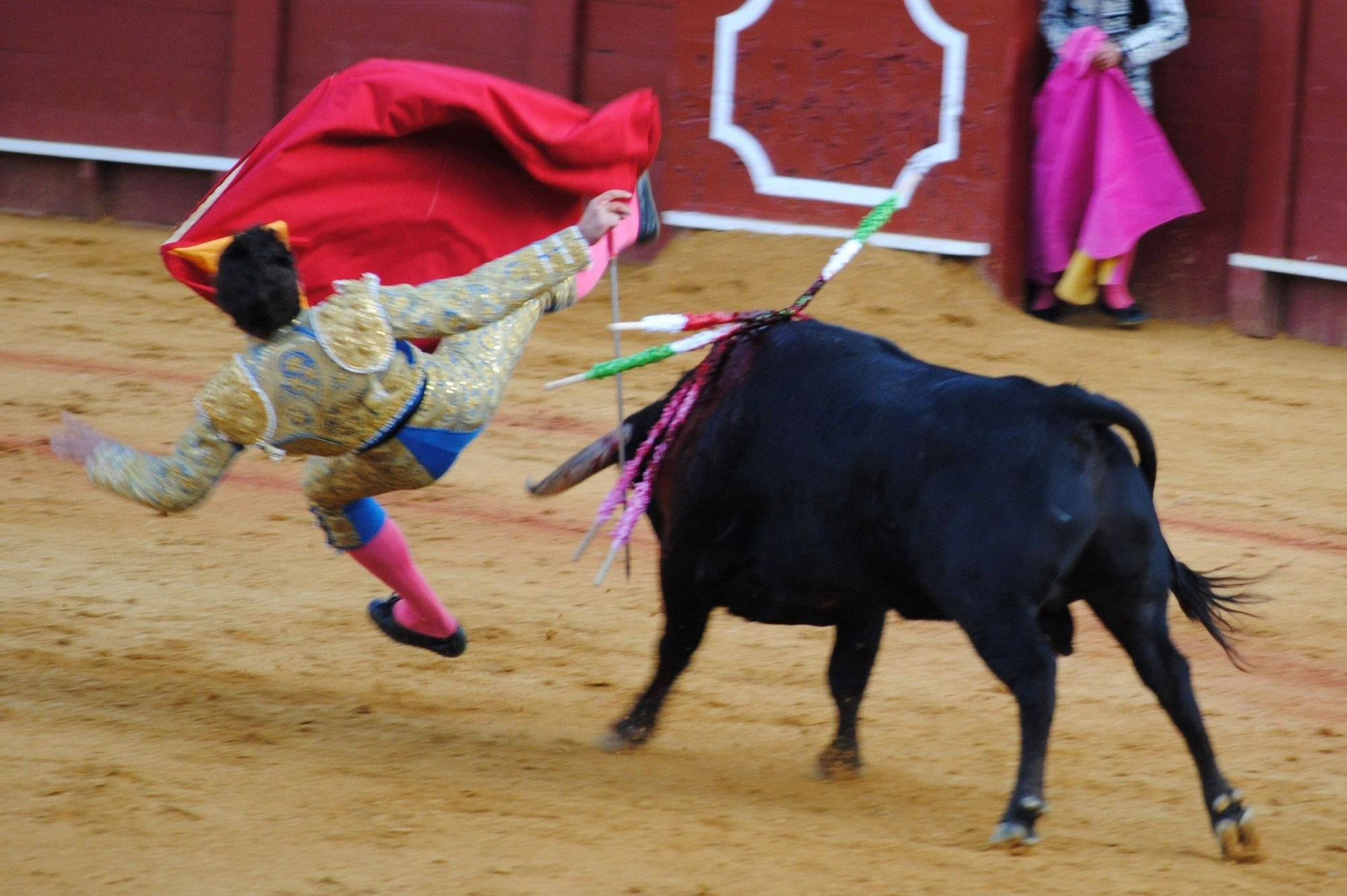 A matador is thrown by a bull at a bull fight in Seville, Spain in April.