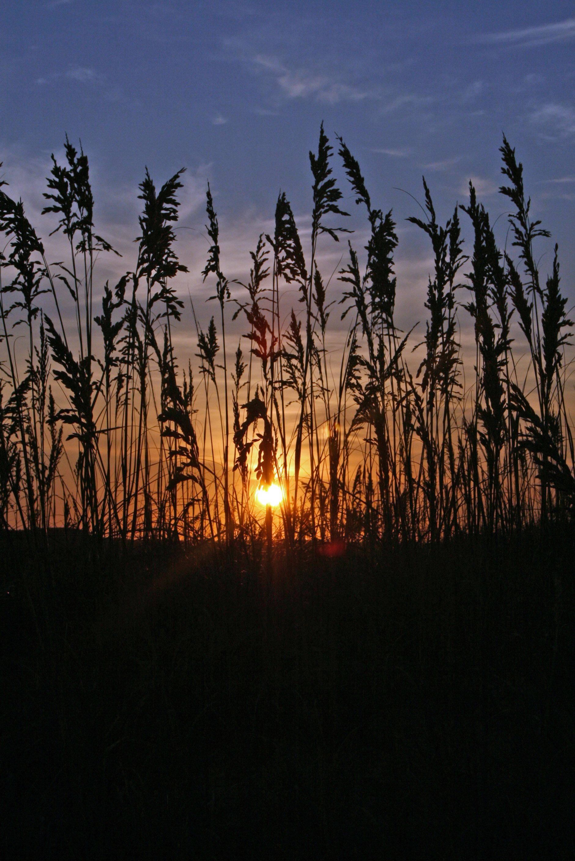 A sunrise silhouettes a field in Cape Hatters, NC in July.