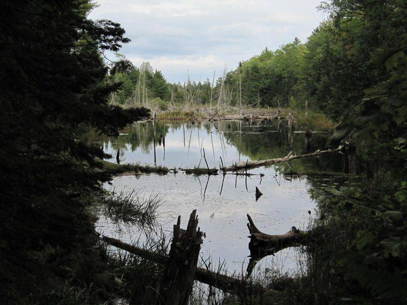 I caught a nice mirror image of this swamp toward sunset leading up to the old Clark Mine ruins near Copper Harbor, MI.