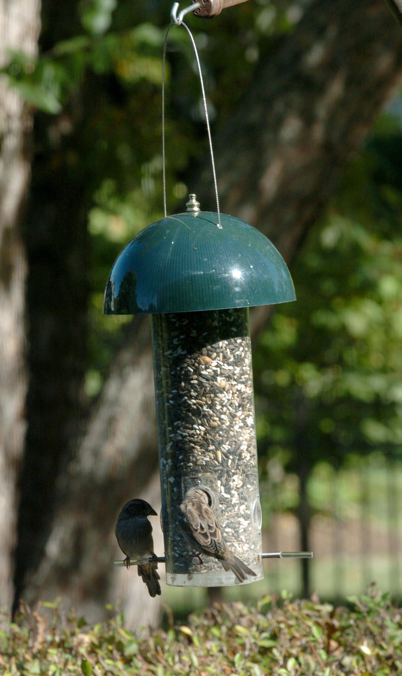 Birds enjoy their bird seeds because no squirrels have gotten into their food. The spring perches on Tom Degler's bird feeders only support birds.