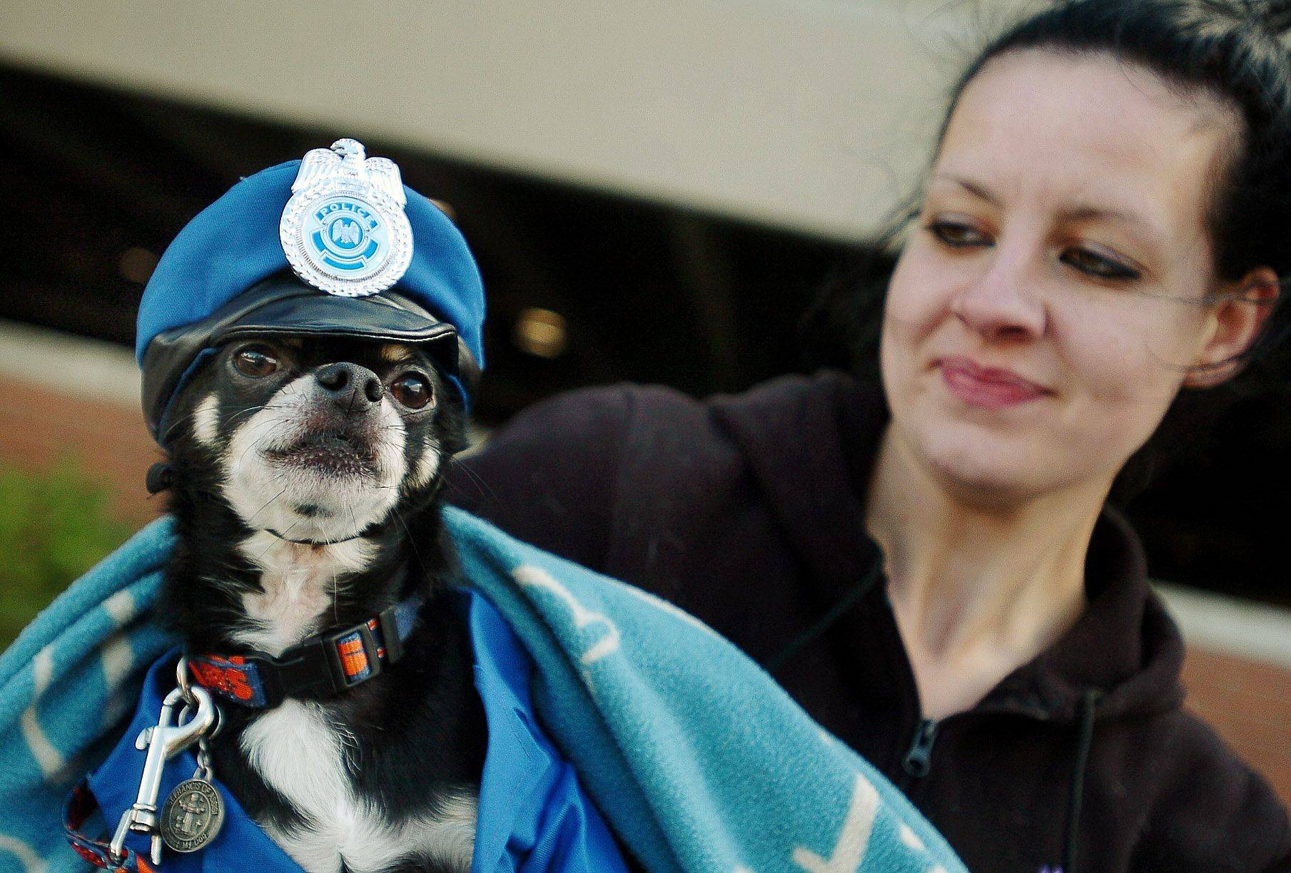 Katie Gallagher of Palatine dressed her chihuahua Trouble as a police officer for the pet parade during the Arlington Heights Autumn Harvest.