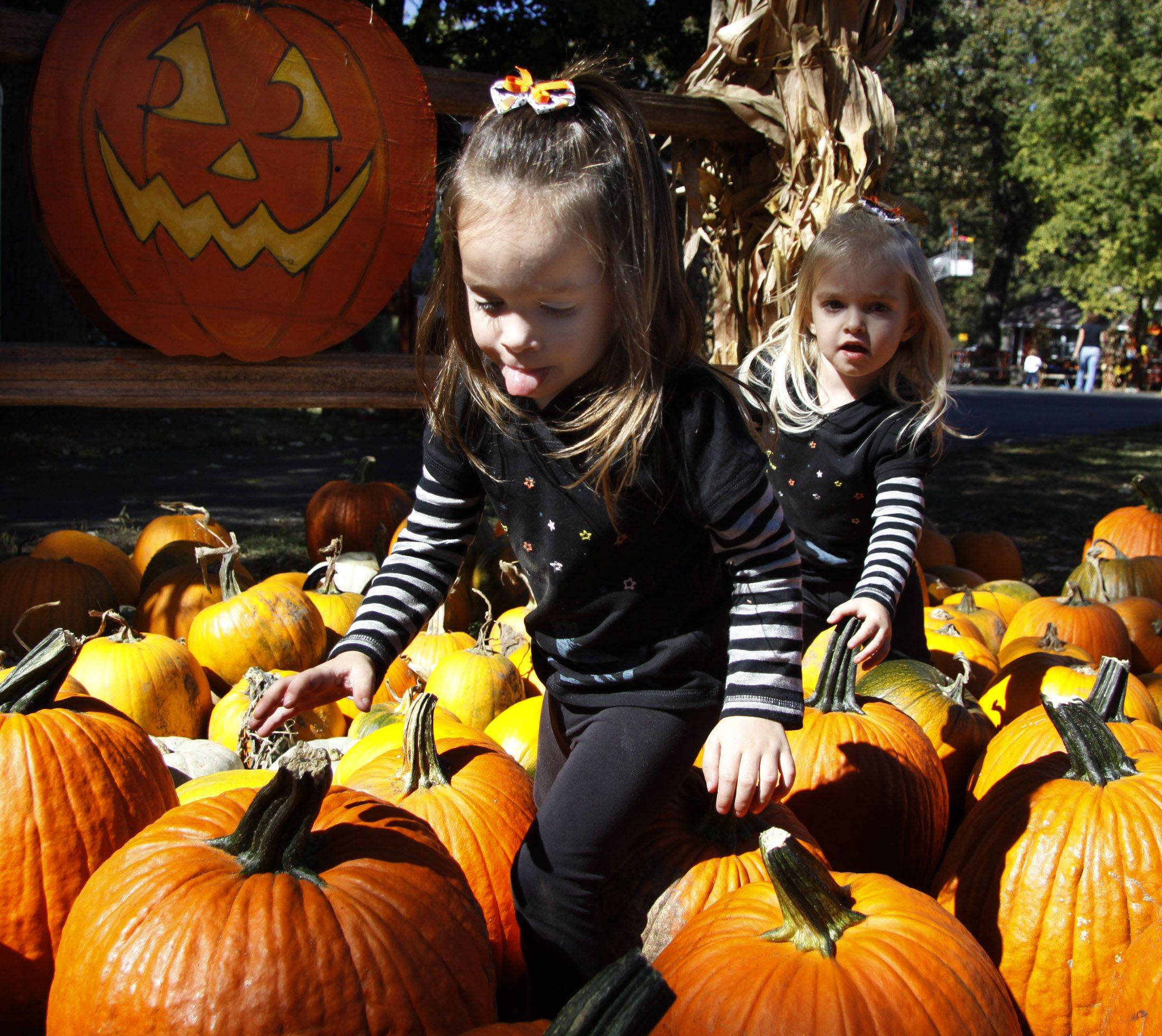 Sonny Acres Farm in West Chicago is in full operation for Halloween with hay rides, haunted houses and pumpkins. Twins Juliana and Ava Neustadt, 3, of Oakbrook walk through one of the many patches of pumpkins on Thursday.