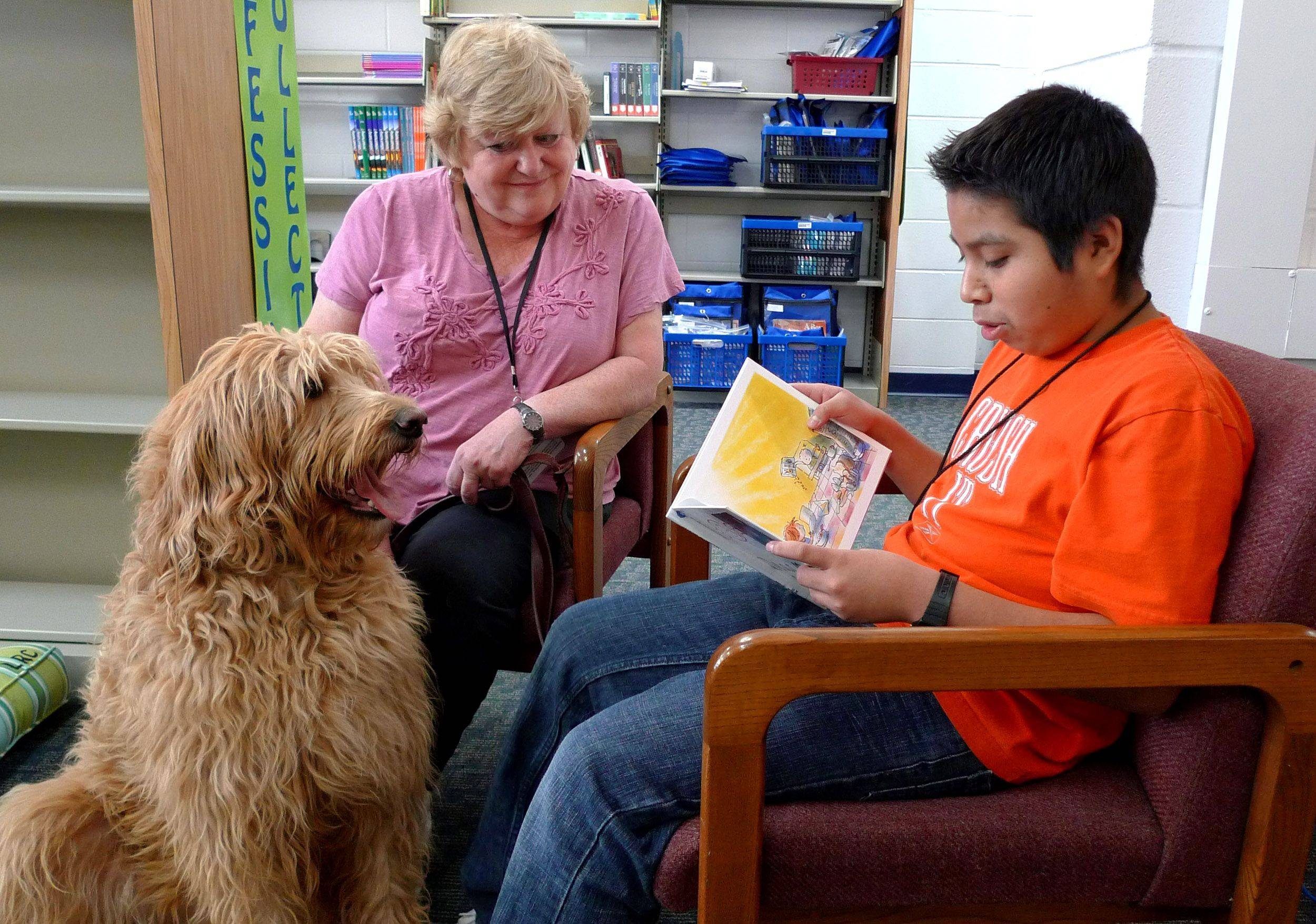 Cooper, a therapy dog, listens to eighth-grader Jose Bravo read to him at Westlake Middle School. Lombard District 44 administrators think reading aloud to dogs helps students learn English and become more fluent. Cooper's handler is Brigitte O'Brien.