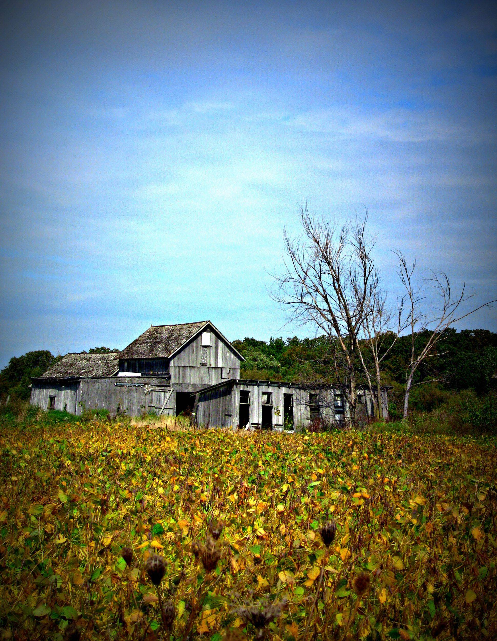 An old, abandoned farm house on Route 120 and Curran Road last month.