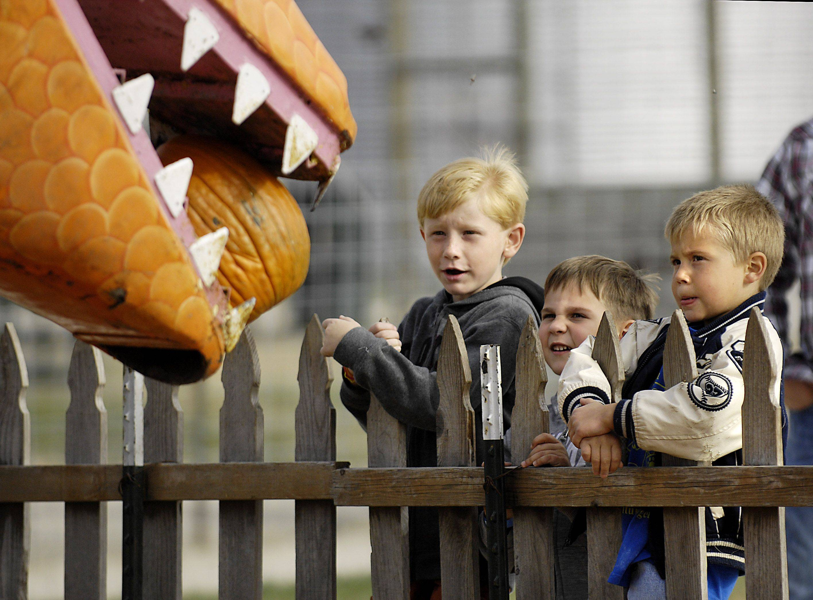 Riley Peppers of Dekalb, Kaleb Jungkans of Sandwich and Ben Hammarberg of Dekalb, all five years old, watch the Pumpkin Eating Dinosaur at Goebberts Pumpkin Farm on Route 47, west of Gilberts Thursday. All the boys have been to the farm in past seasons. The business offers many attractions as well as pumpkin picking.