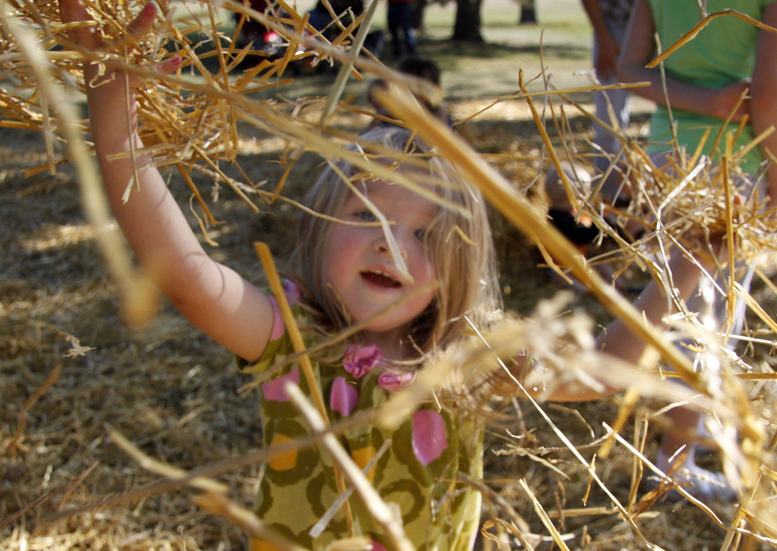 Natalie Elste, 2, of Lombard plays in the hay at Lombard Park Districts fall festival Saturday at Lombard Common Park.