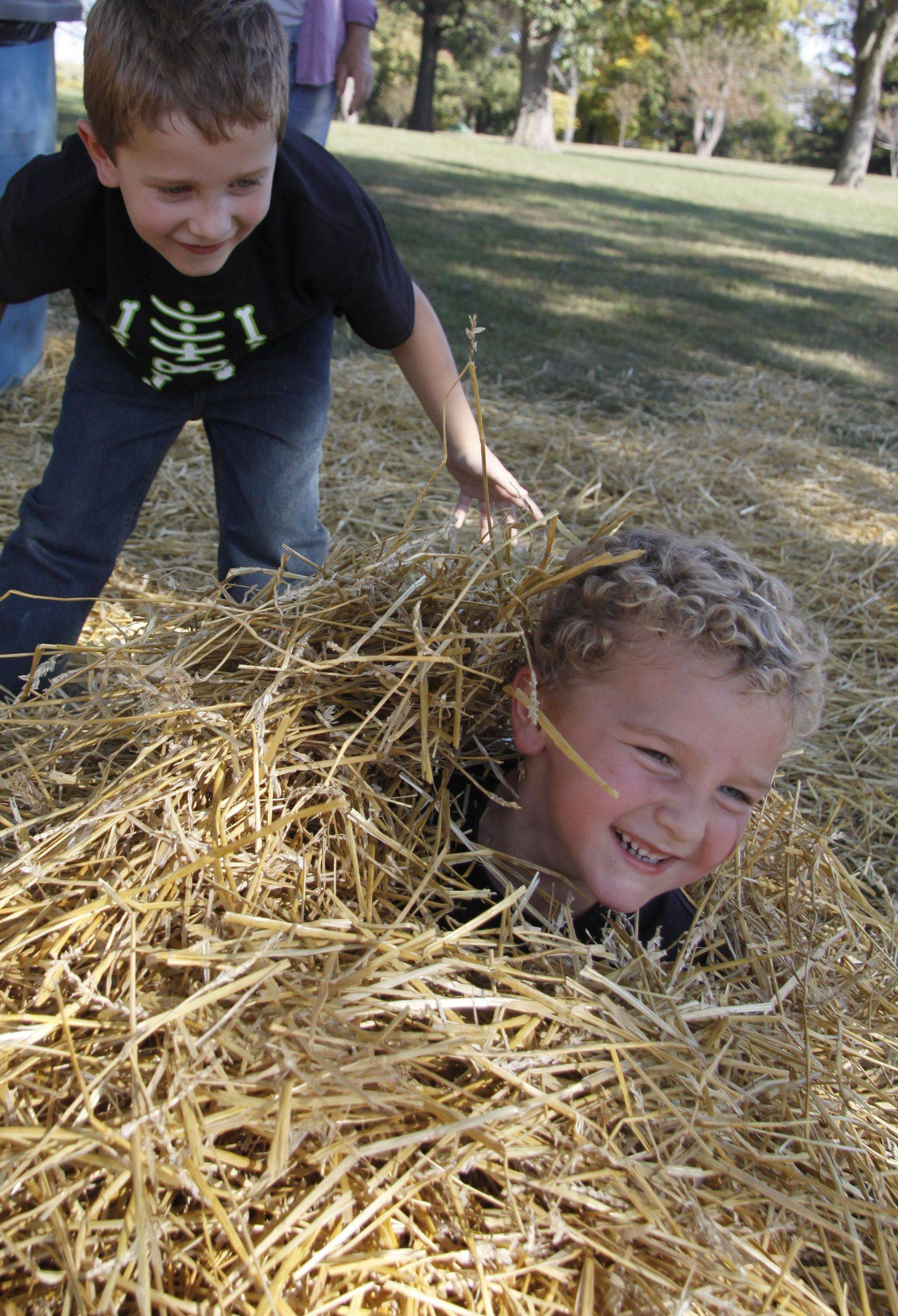 Wyatt Wezeman, 3, laughs after being buried by his brother Jackson Wezeman, 5, in the hay at Lombard Park Districts fall festival Saturday.