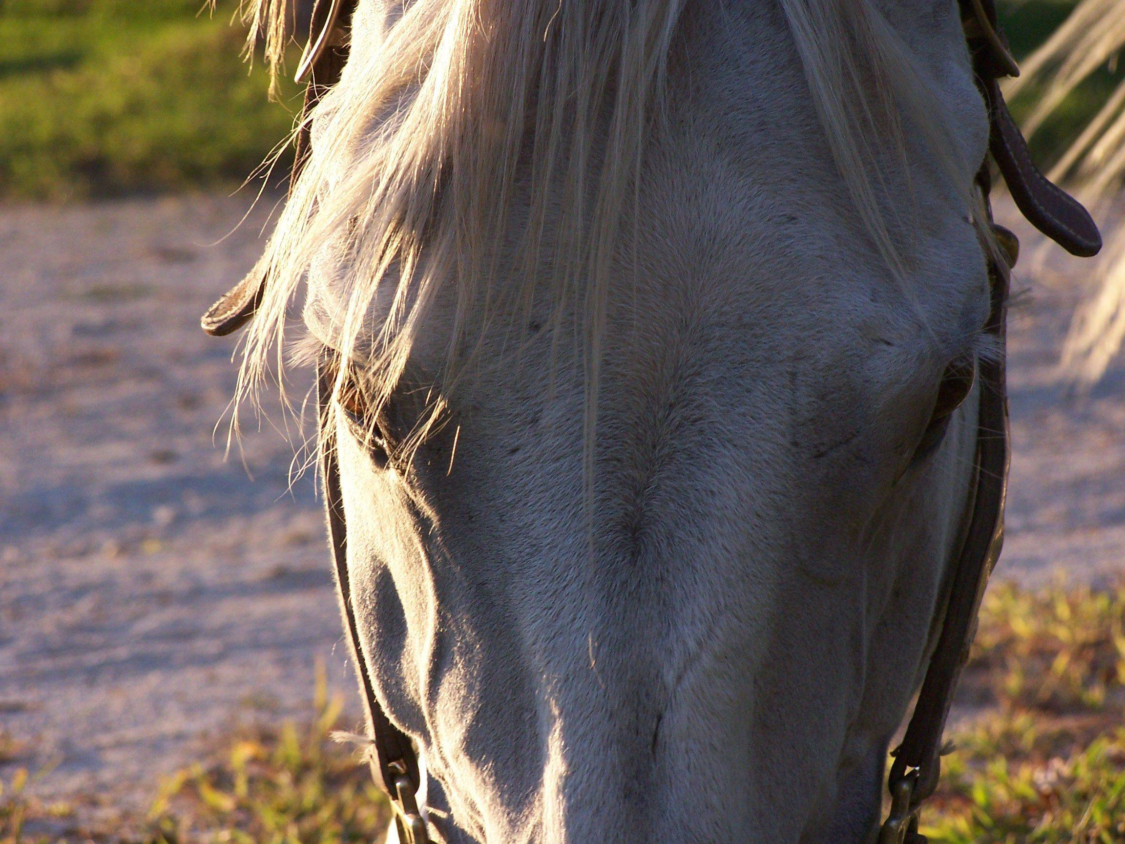 A horse grazes at Throughquest Acres Barn in South Barrington last month.