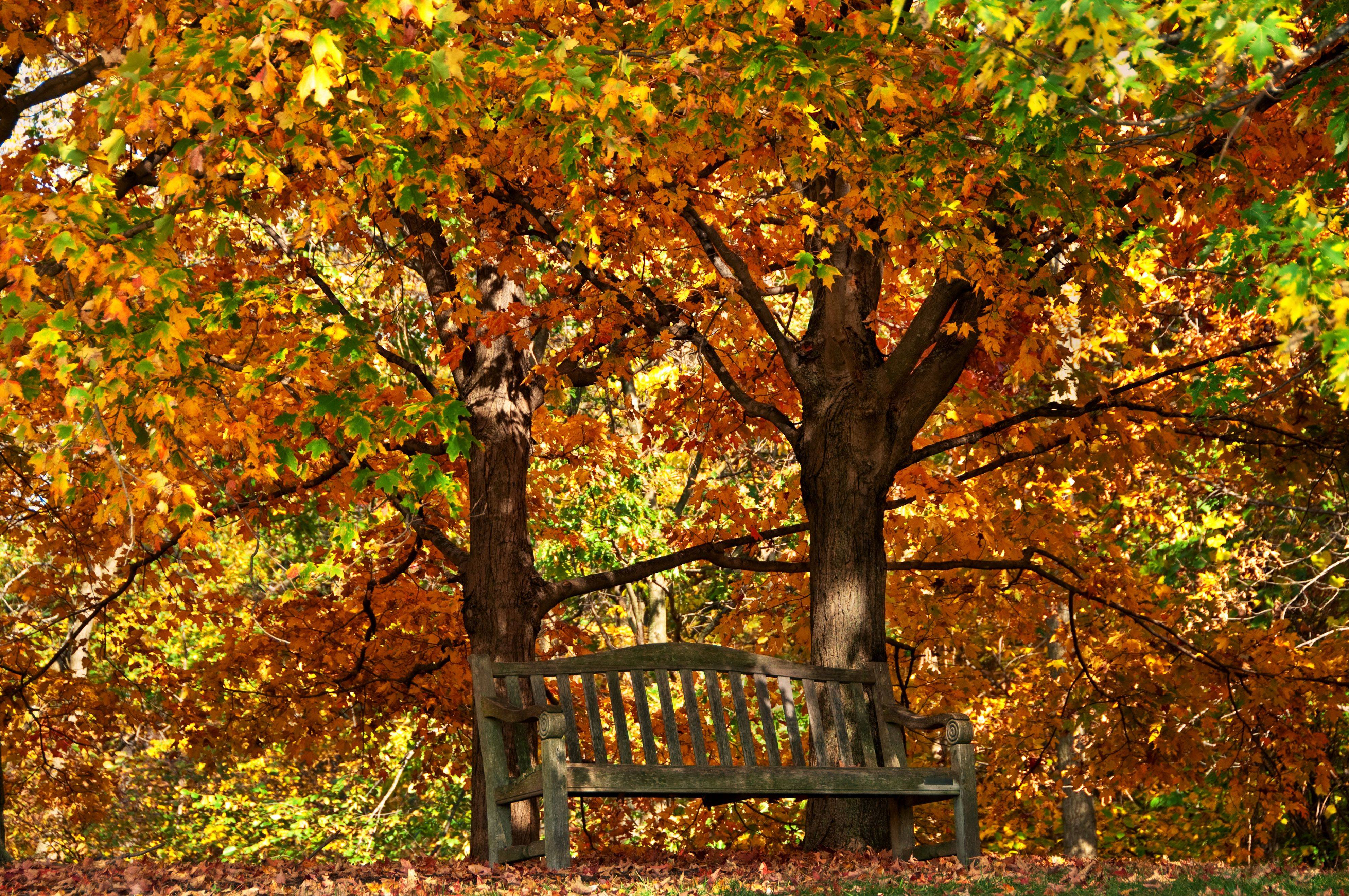 A bench among the fall leaves at the Chicago Botanic Garden at McDonald Woods on last week.