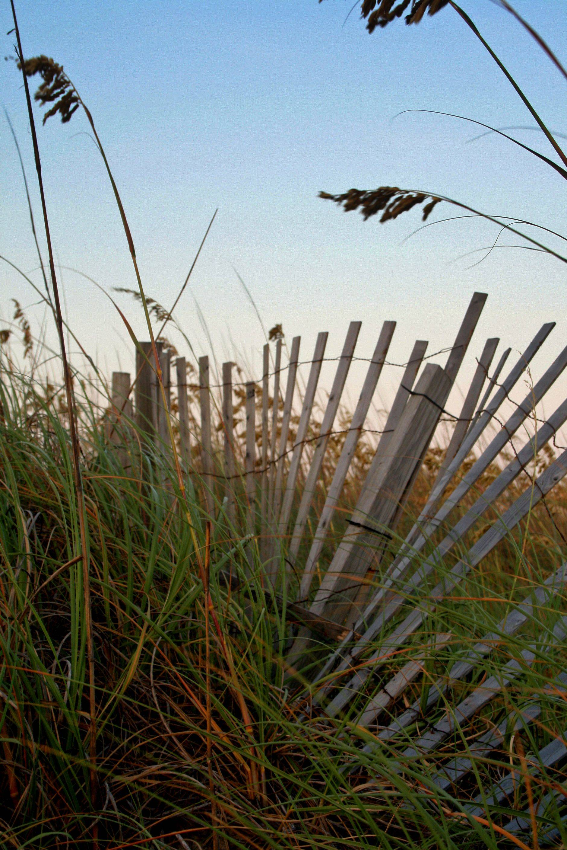 The fence stands in the middle of tall sea oats having seen better days, twisted and blown over by the wind and surf over the years in Cape Hatteras, NC last summer.