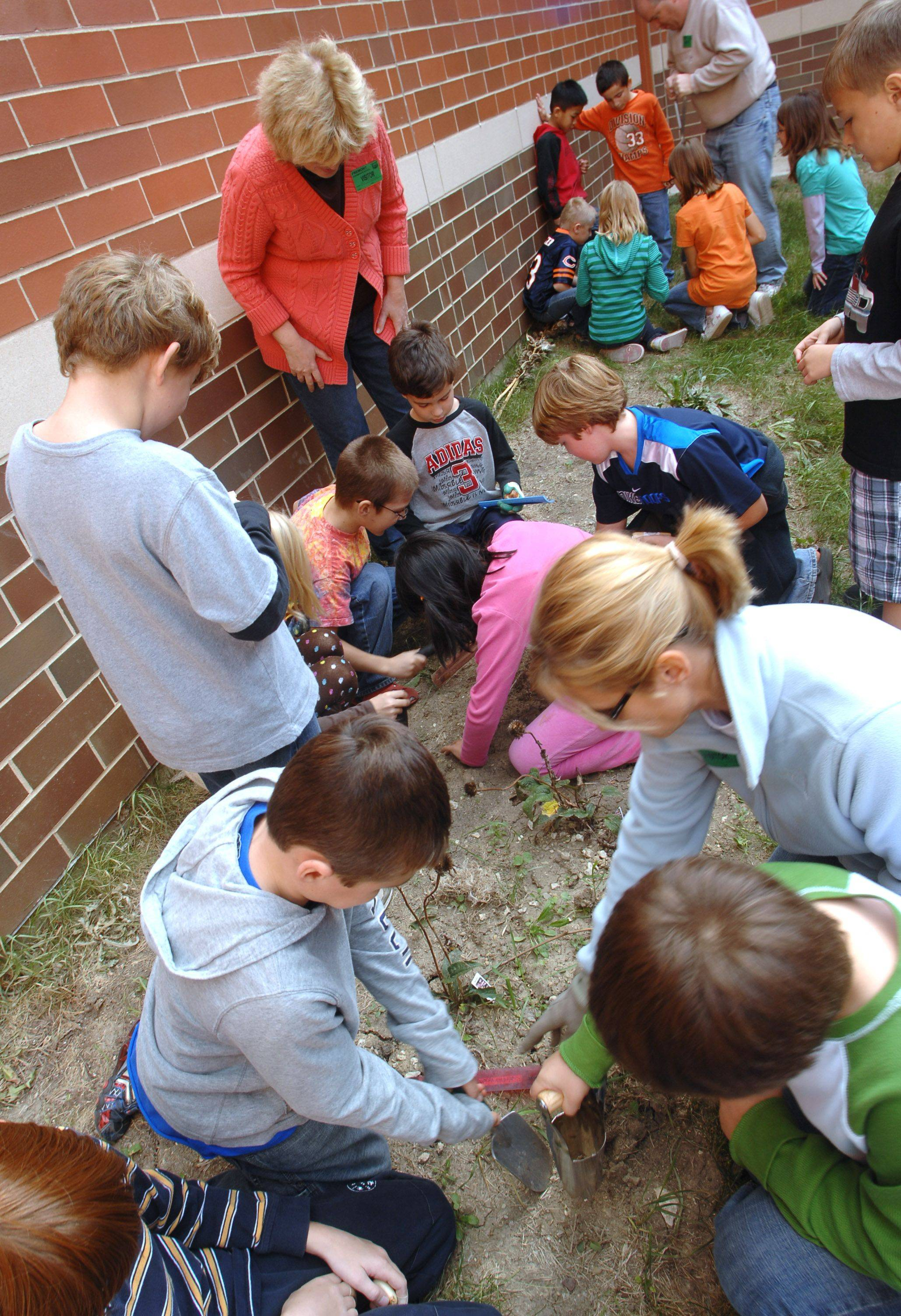 About 50 third and fourth grade students at Fremont Intermediate School plant tulip bulbs in the school's butterfly garden.