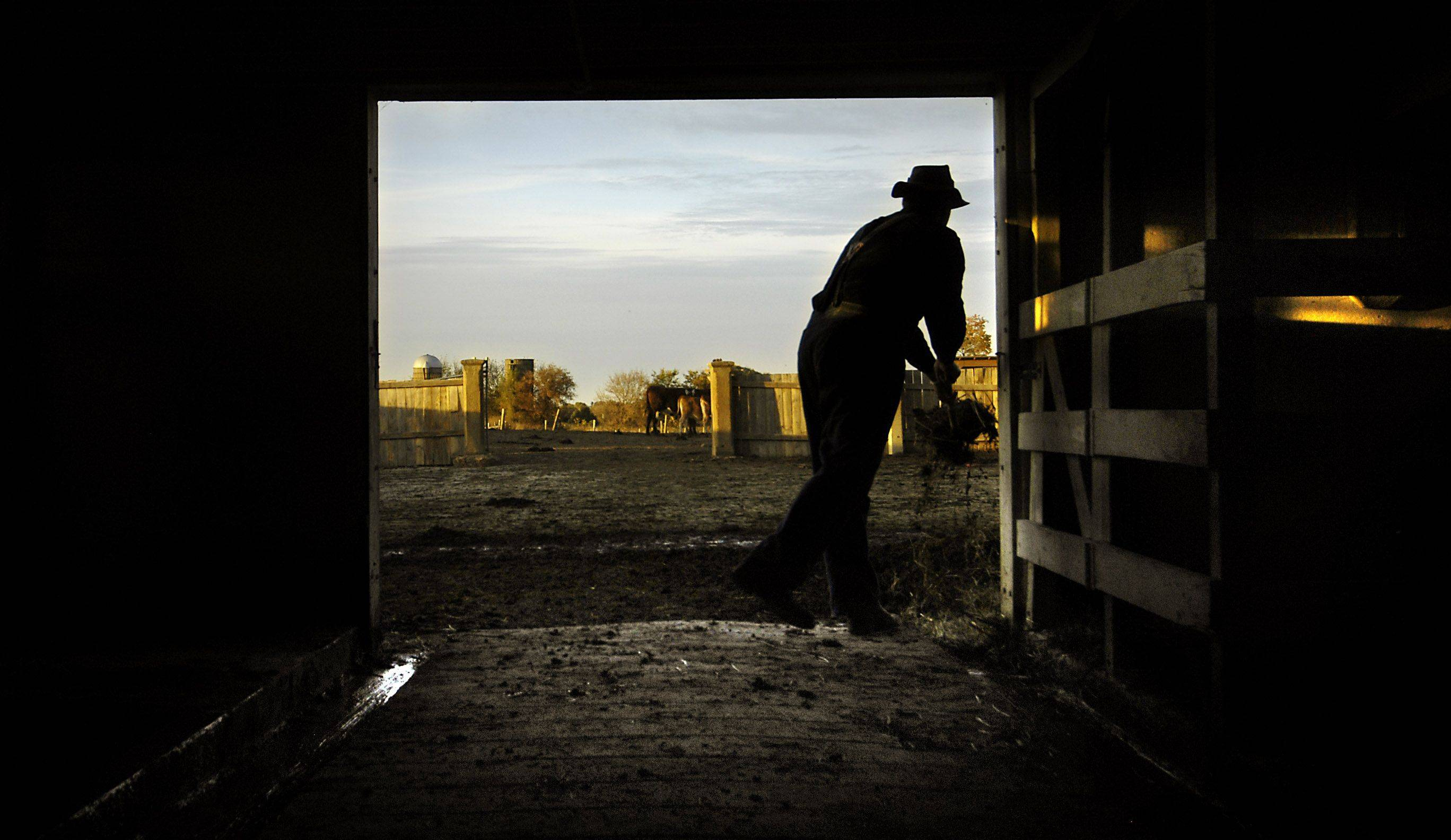Farm manager Kirk Bunke cleans the barn after turning out the cows at Primrose Farm in St. Charles.