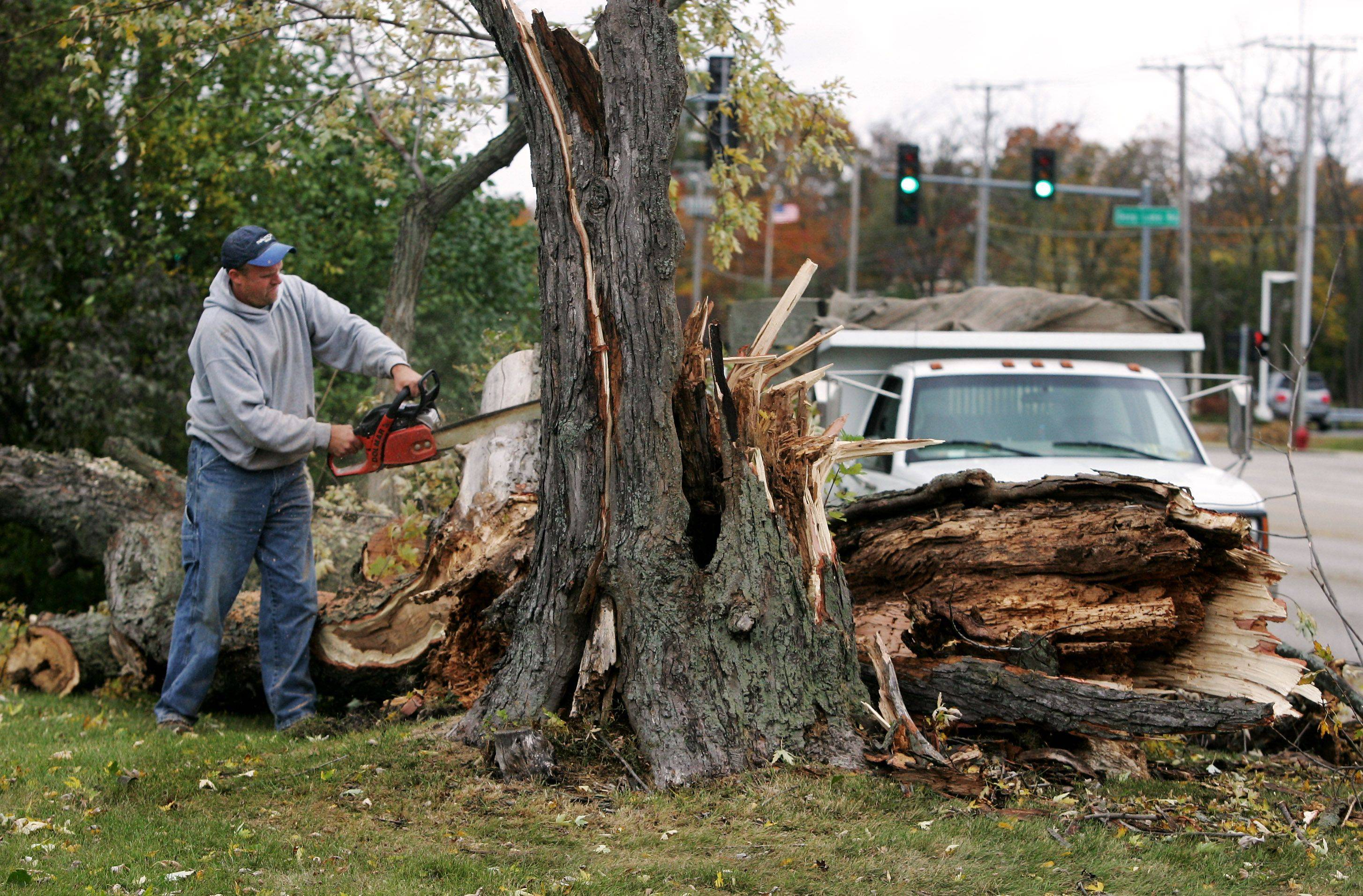 Jeff Mitchell of Mitchell Landscaping in Antioch use a chain saw to remove a fallen tree Tuesday that hit a moving car this morning on Grand Avenue east of Deep Lake Road in Lindenhurst.