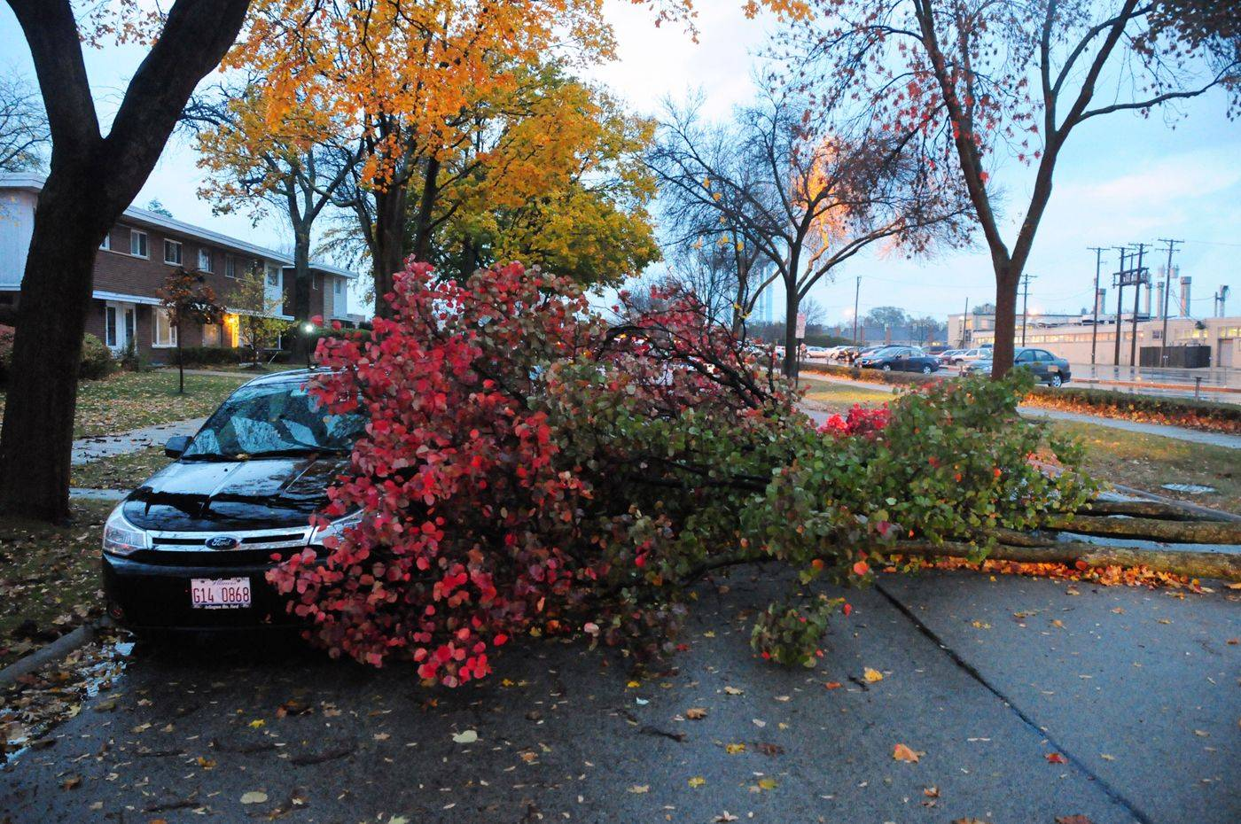 Photo courtesy of Jim Rasmussen, Rasmussen PhotographyA downed tree blocks the entire roadway in the 300 block of South Maple Street in Mount Prospect Tuesday morning.