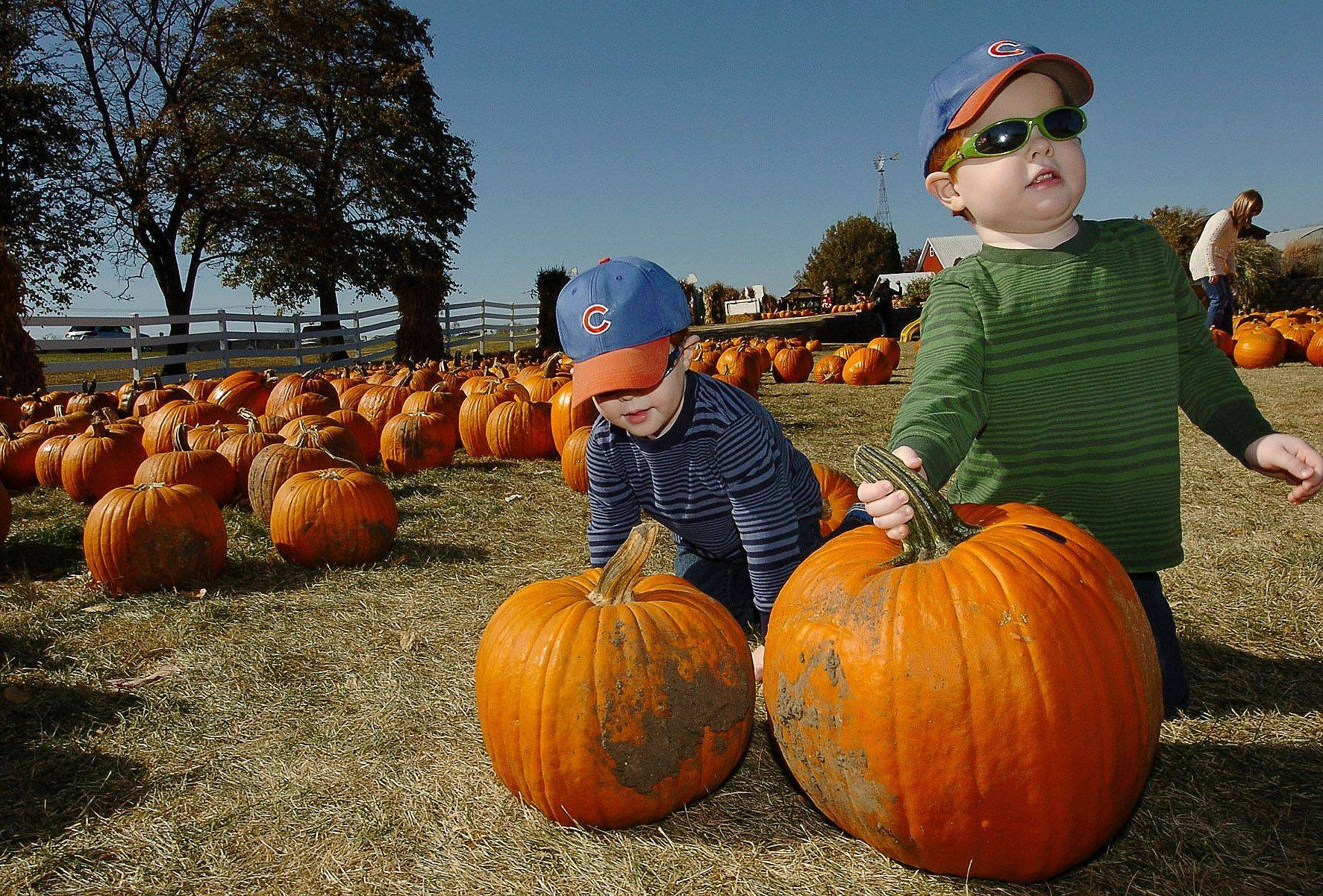 Three-year-old twins Joey, left, and Tommy Johnston of Palatine help mom pick out a pumpkin or two at Goebberts Pumpkin Farm in South Barrington.