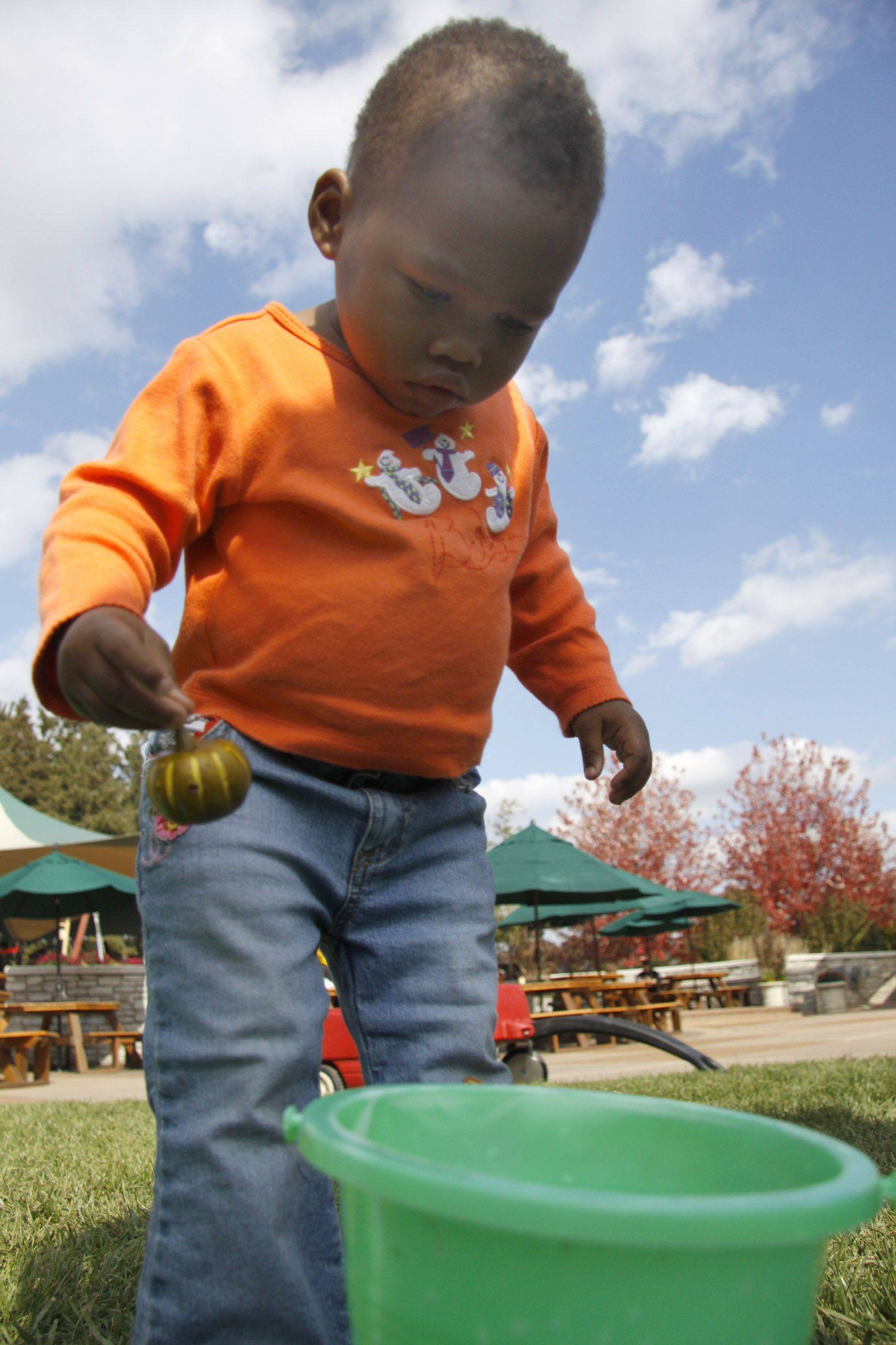 Sandina Lewen, 2, of Willowbrook tries to put a gourd into the bucket at one of the children's activities at Morton Arboretum's Fall Festival Sunday. Lewen who was recently adopted from Haiti in January, and is celebrating her first American Halloween.