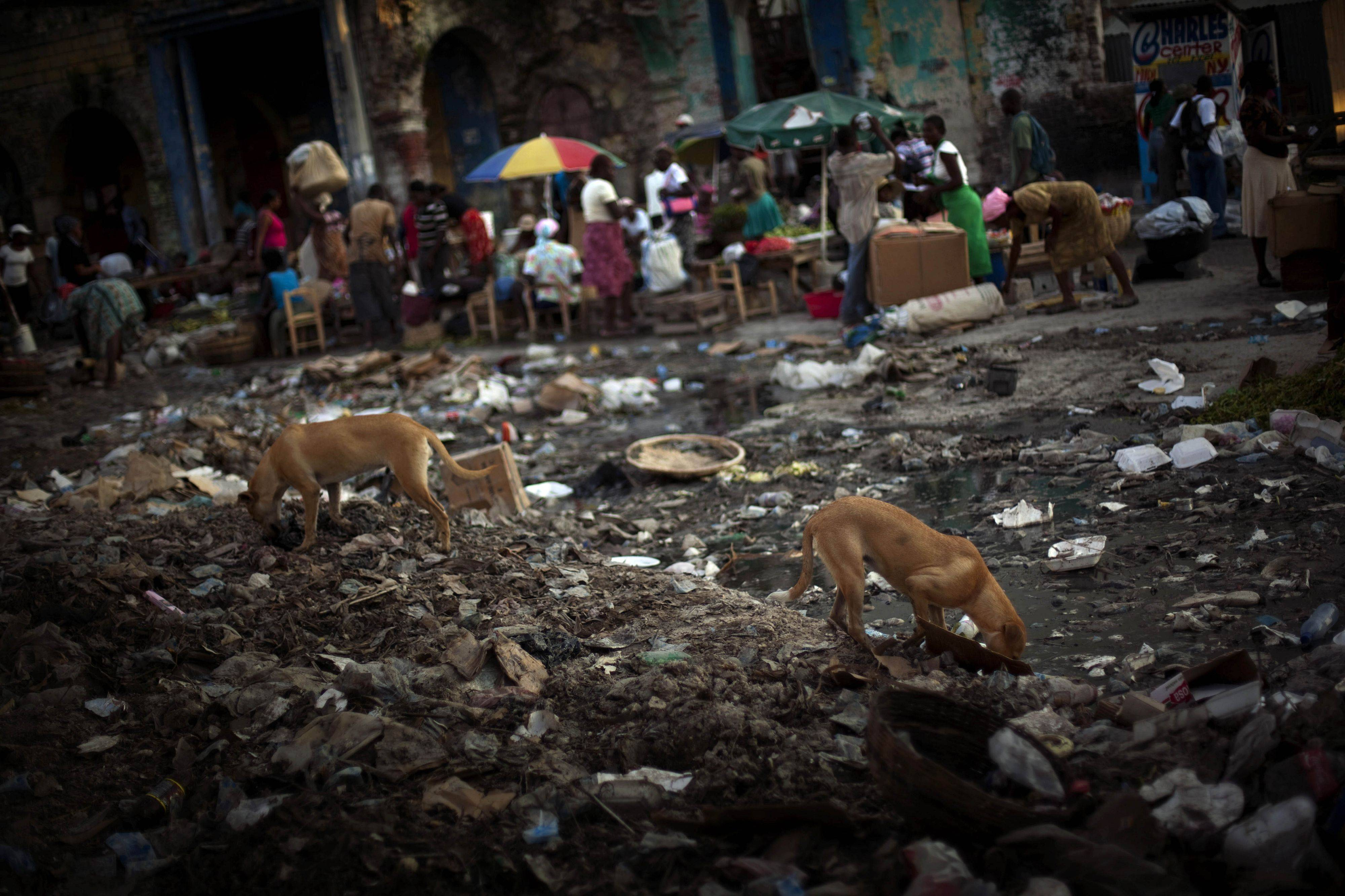 Dogs looking for food in a street covered with garbage in a market in Port-au-Prince downtown, Haiti. The cholera epidemic that has entered Haiti's capital has caused the hospitalization of more than 11.000 people across the country and claimed at least 643 lives, mostly in the countryside