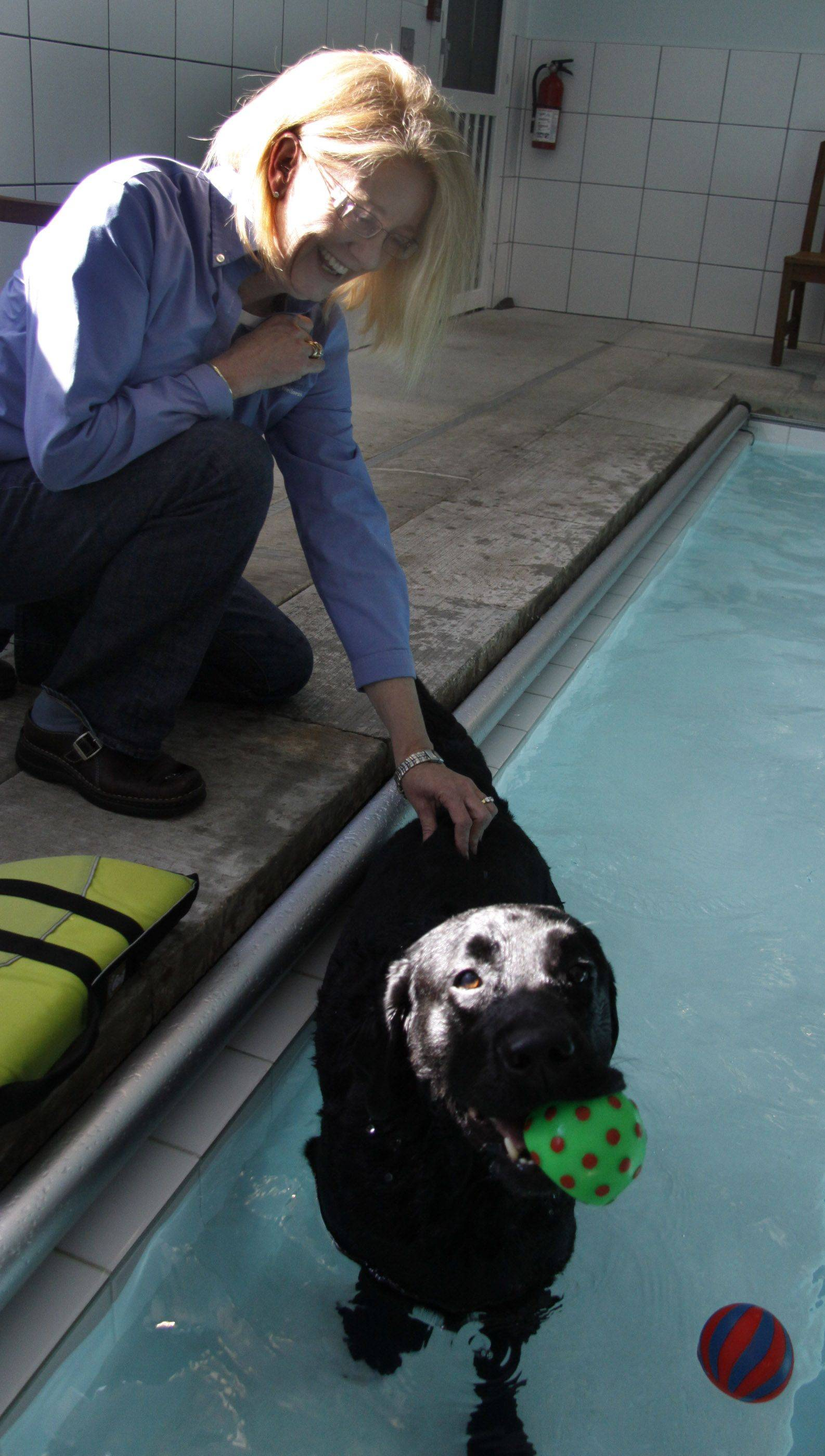 Lee Deaton, owner of Natural Healing Whole Dog Wellness in West Chicago, pets Ringo, a 6-year-old black Labrador when he takes a break from his swimming routine.