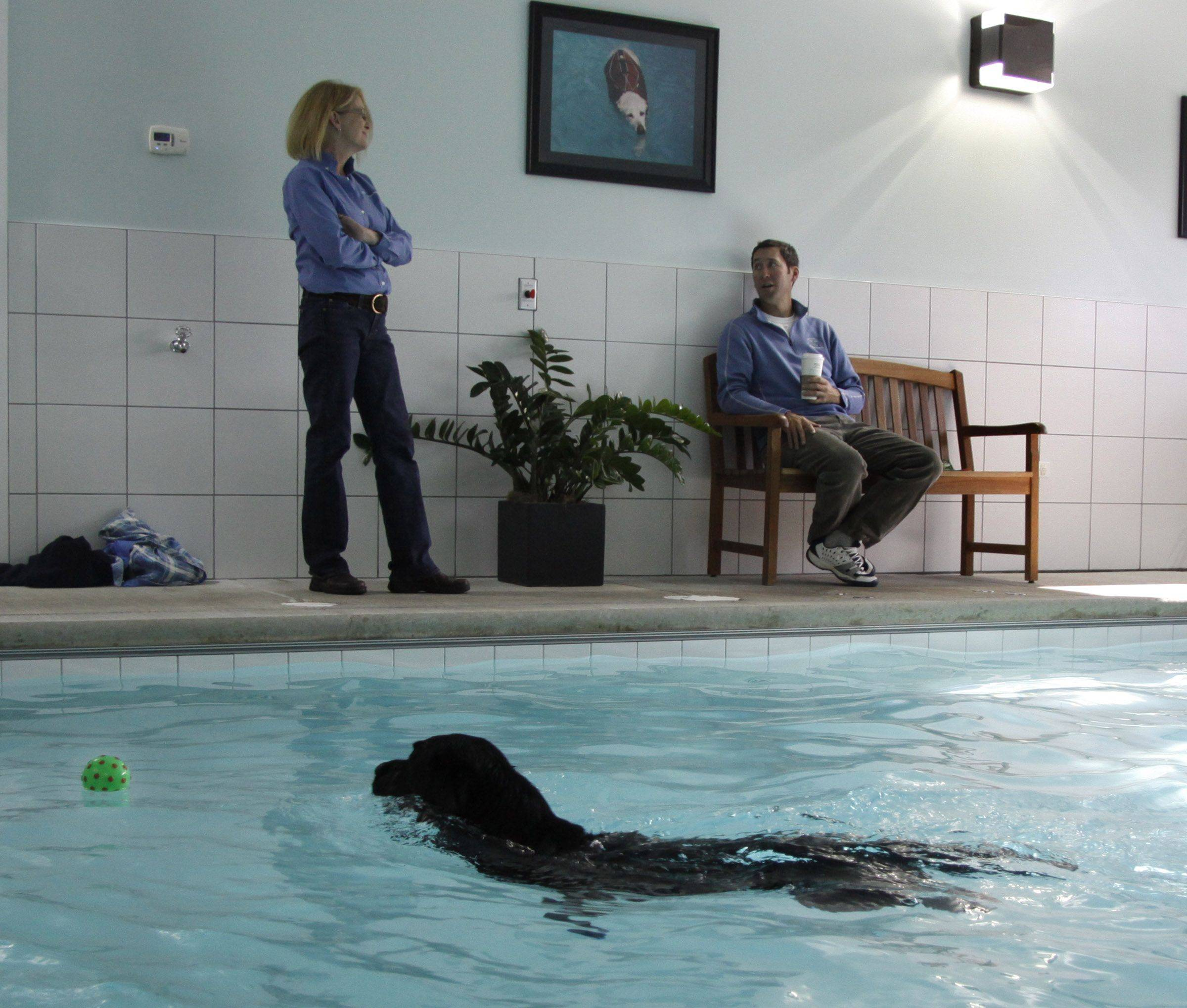 Ringo swims past his owner Paul Garvin of Hinsdale and Natural Healing owner Lee Deaton on his way to retrieve a ball in the pool.