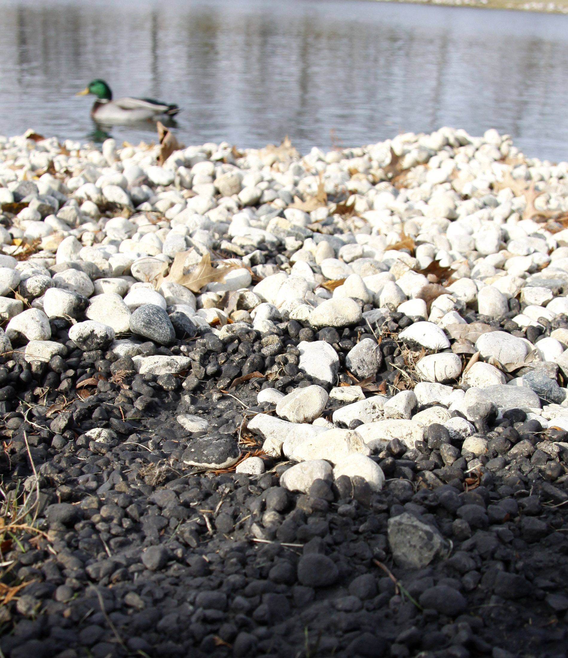 Suspicious black rocks rest beneath light-colored stones at Lombard Lagoon. Lombard Park District officials are having some of the rocks analyzed to determine if they might be contaminated.