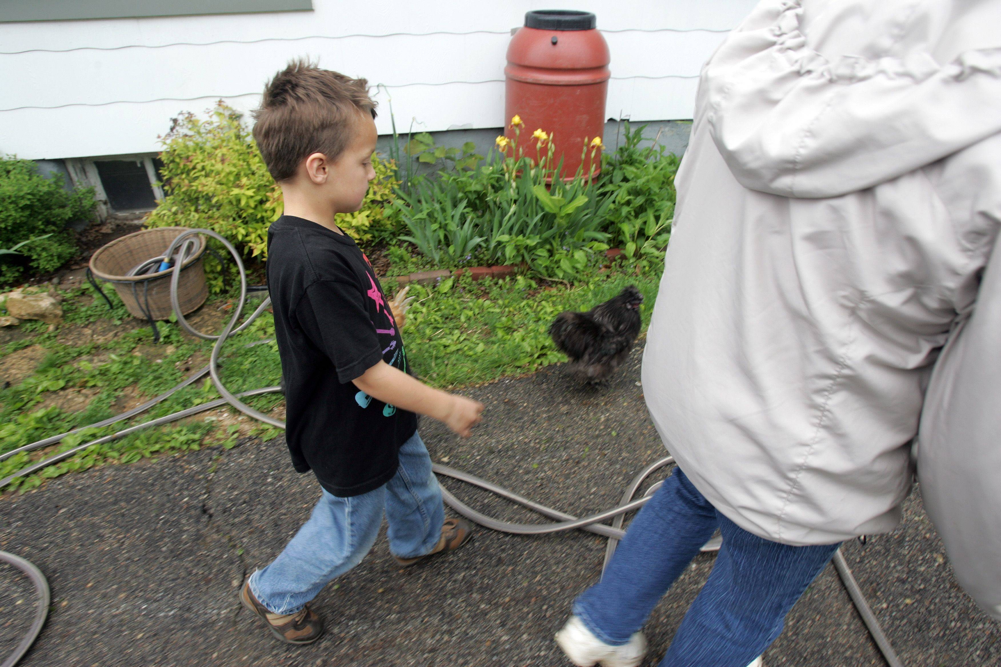 Jeanne Lyon and her son Tim, 8, prepare to visit some of the six chickens that the family keeps as pets.