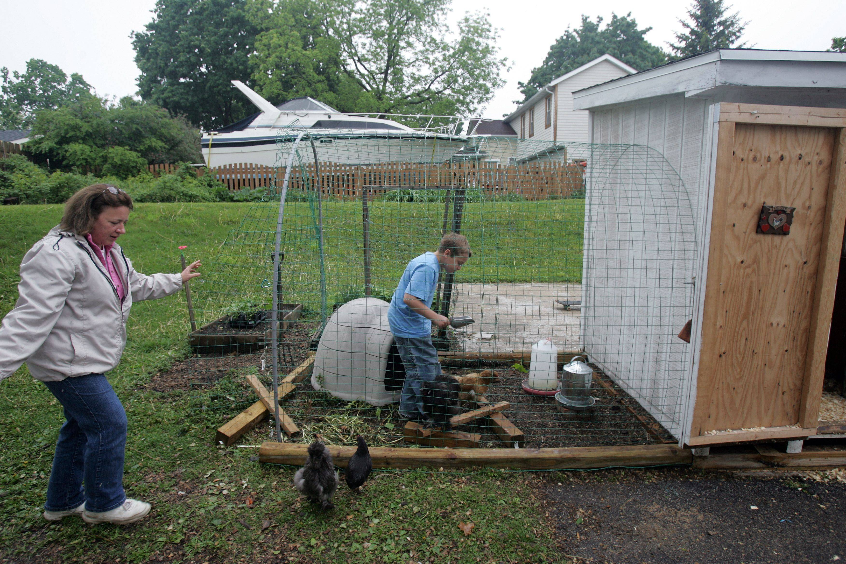 Jeanne Lyon of St. Charles and her ten-year-old son feed the family's chickens.