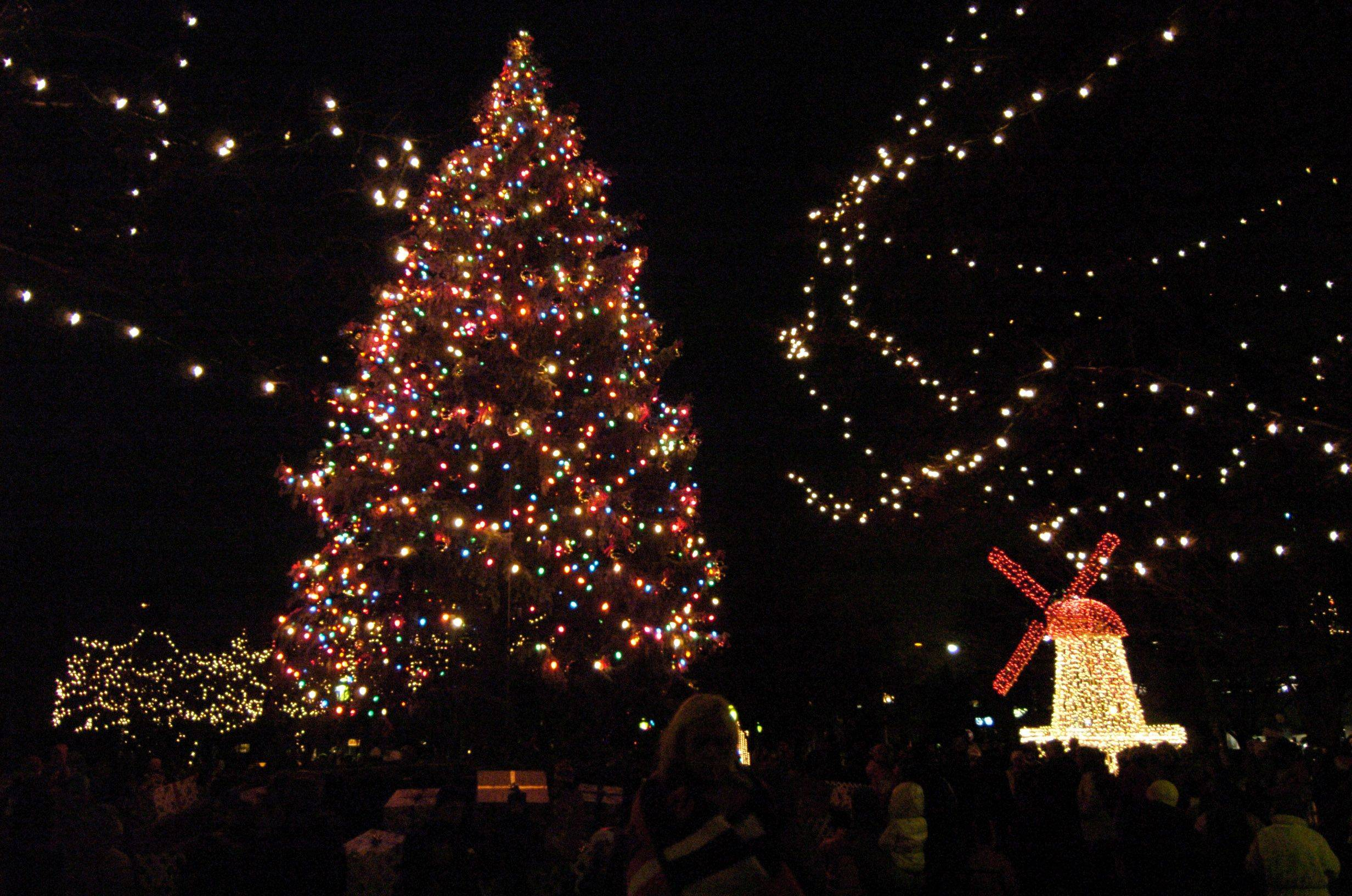 The Arlington Heights Christmas Tree looms over North School Park following Friday's tree lighting ceremony.
