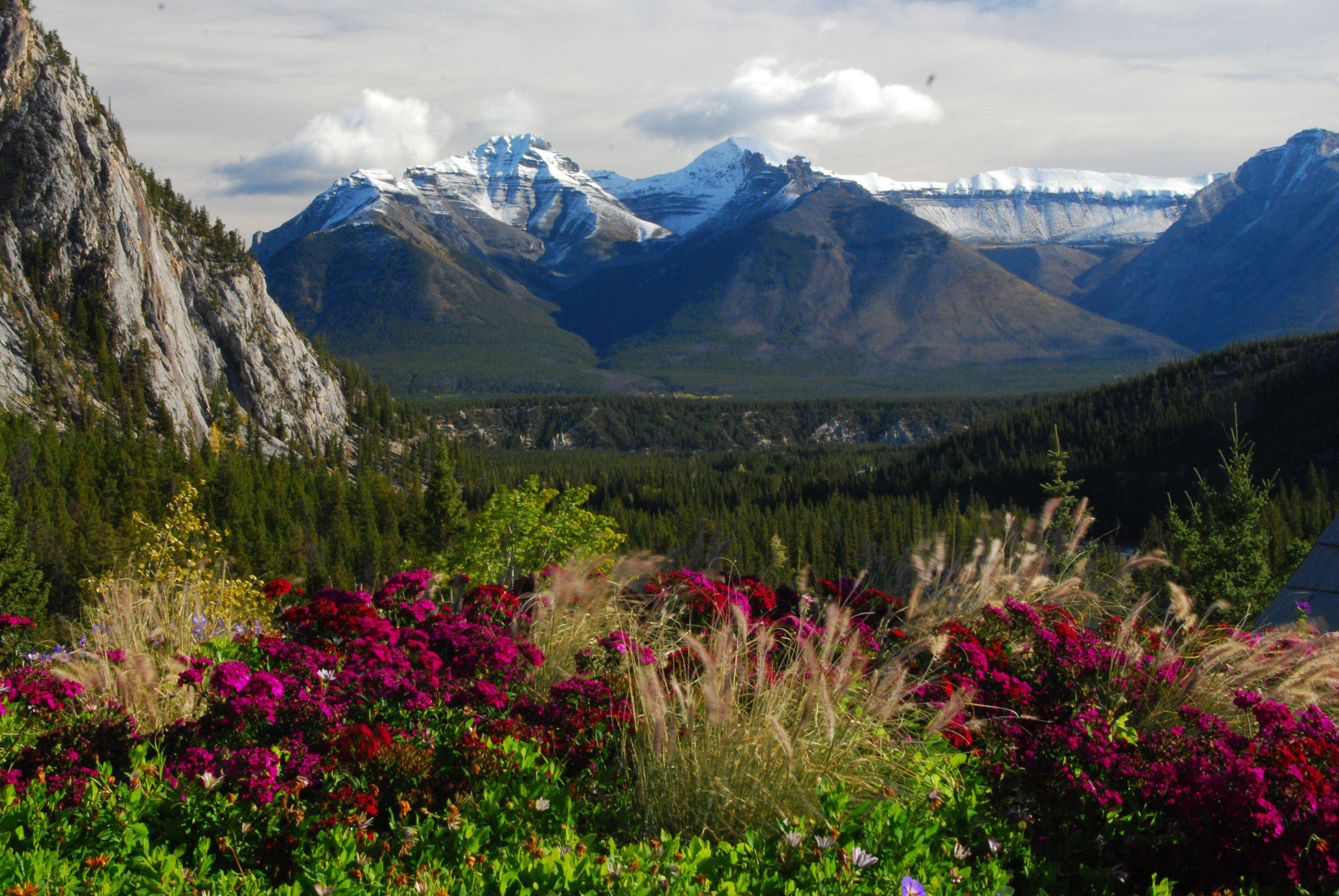 Flowers are in full bloom against the snow covered mountains in Canada.