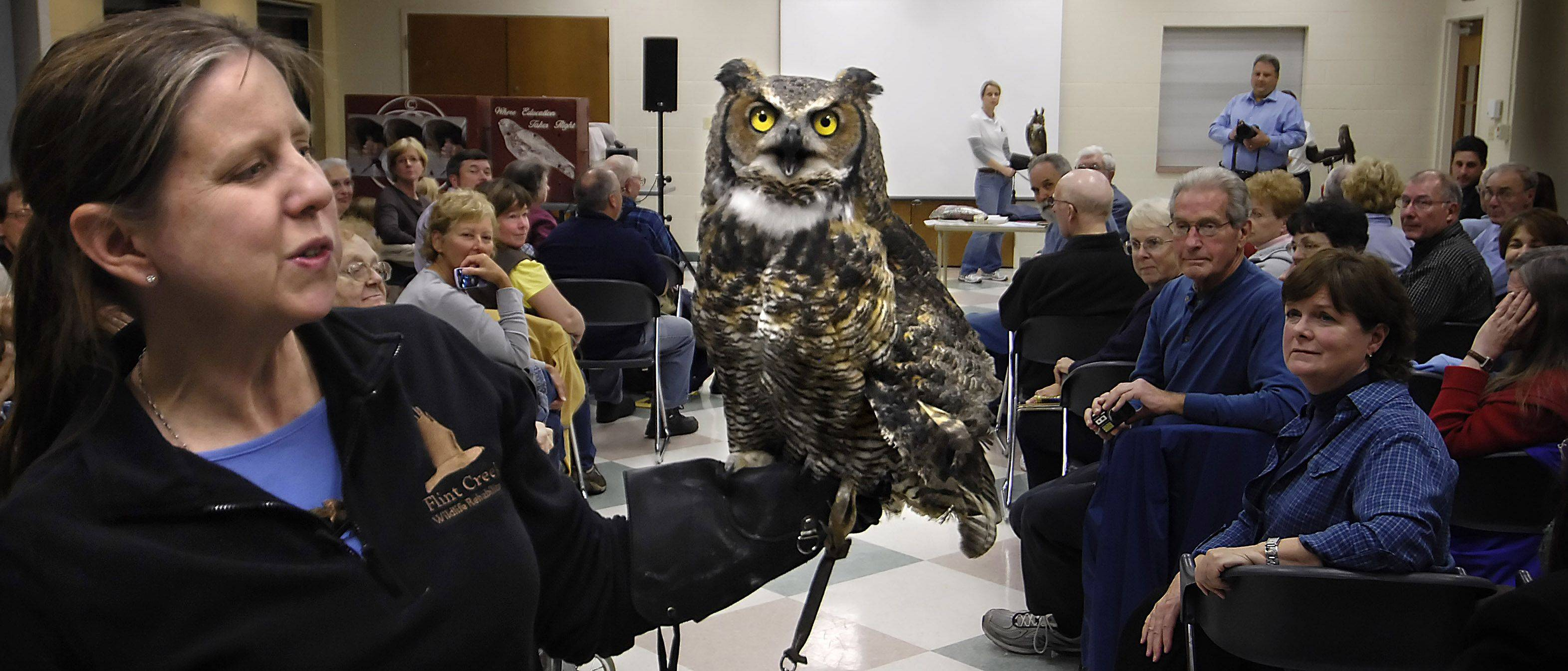 Dawn Keller, founder of Flint Creek Wildlife Rehabilitation Inc., holds Pennsylvania, a large female great-horned owl during the Kane County Audubon Society monthly meeting at the Pottawatomie Community Center in St. Charles. At 4 pounds, Pennsylvania is considered heavy. She is one of six birds of prey Keller uses for education purposes and cannot be released.