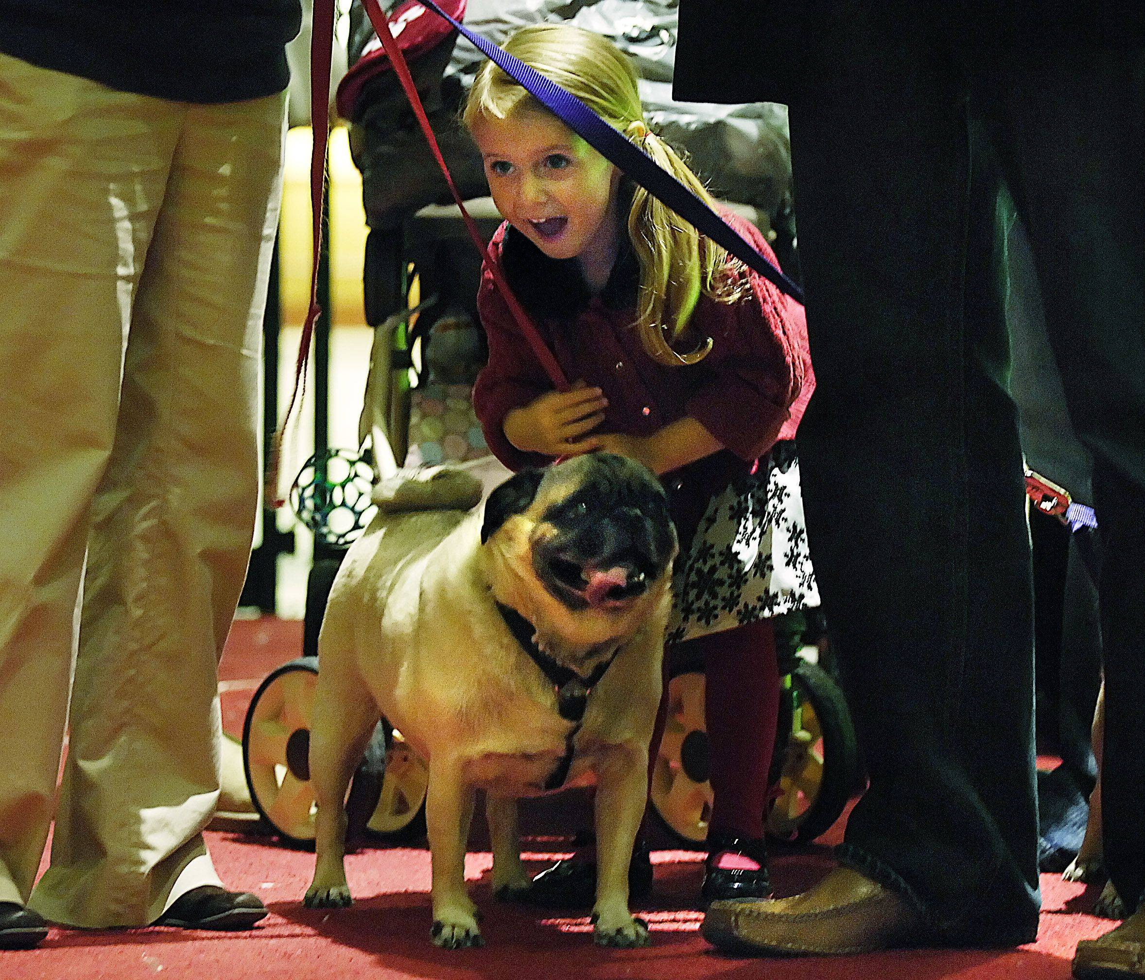 Three-year-old Grace Haase reacts as she sees Santa Claus while her pug Guapo seems less interested as they wait their turn in line Monday evening at the Spring Hill Mall in West Dundee. The mall is welcoming pet owners again to have their photo taken with Santa on Monday the 13th, 6-9 pm. The Haase family is from Crystal Lake.