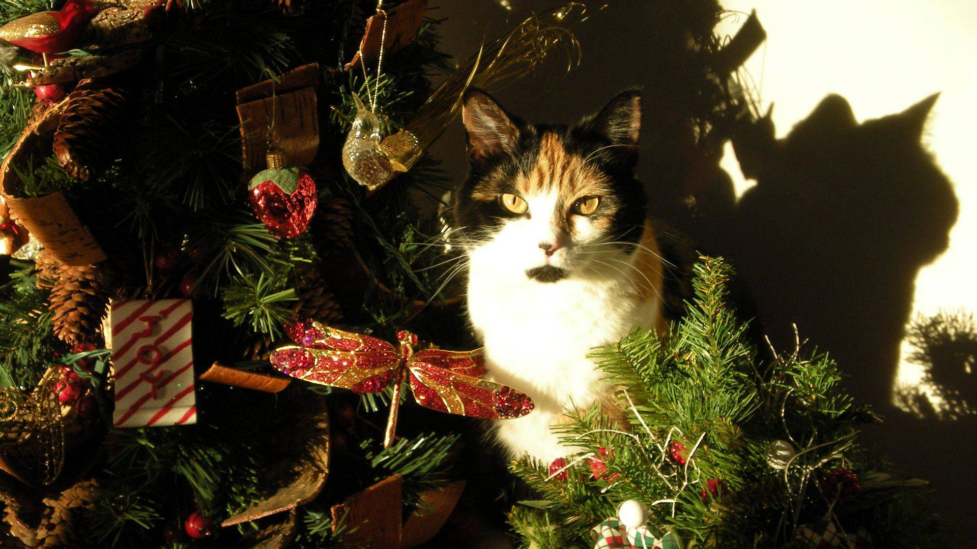 Suki the cat sits in the middle of my Christmas decorations as the sun shines through the window.