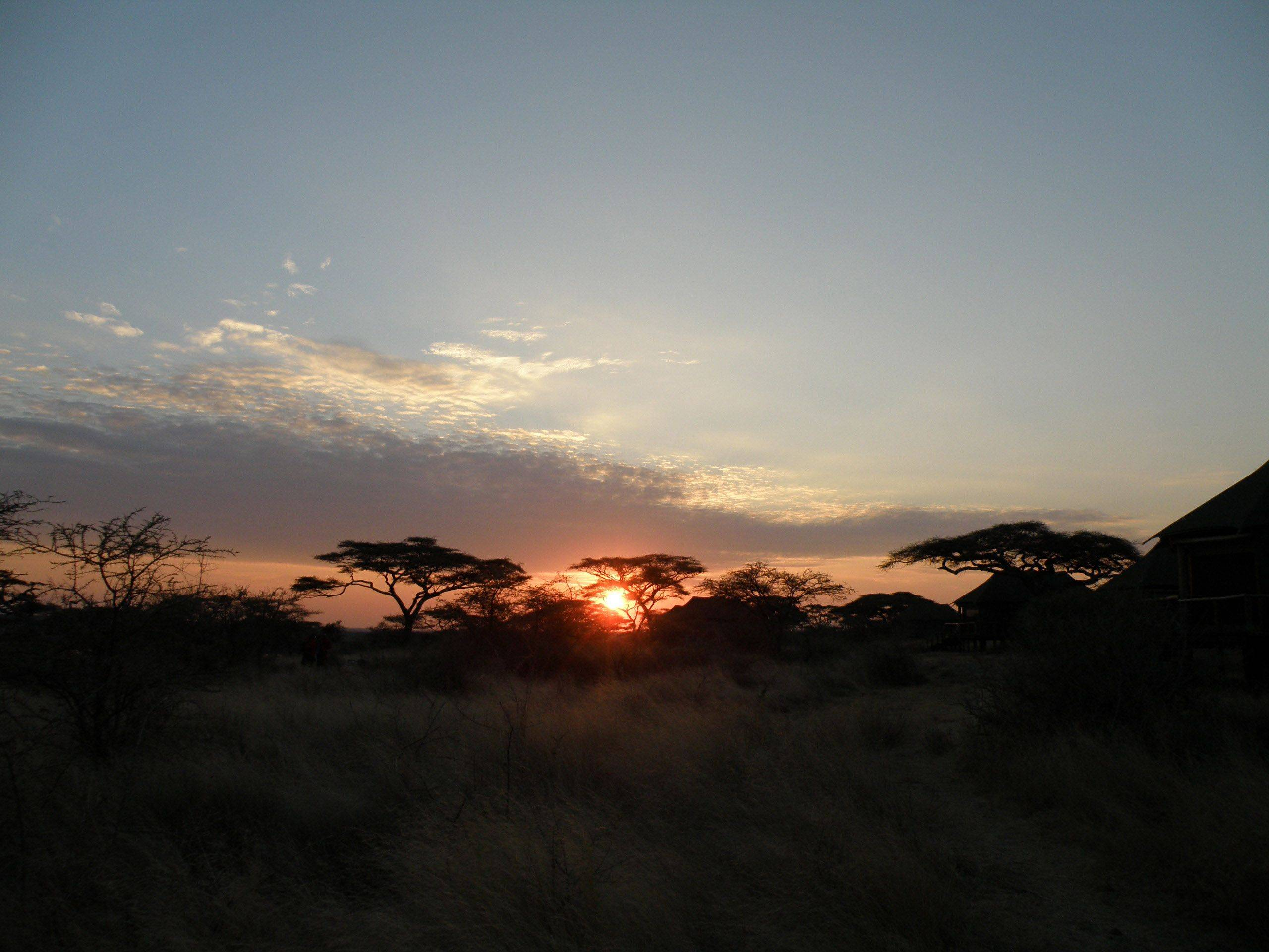 The sun rises over the umbrella Acacia trees on the Ngorongoro Highlands in Tanzania.