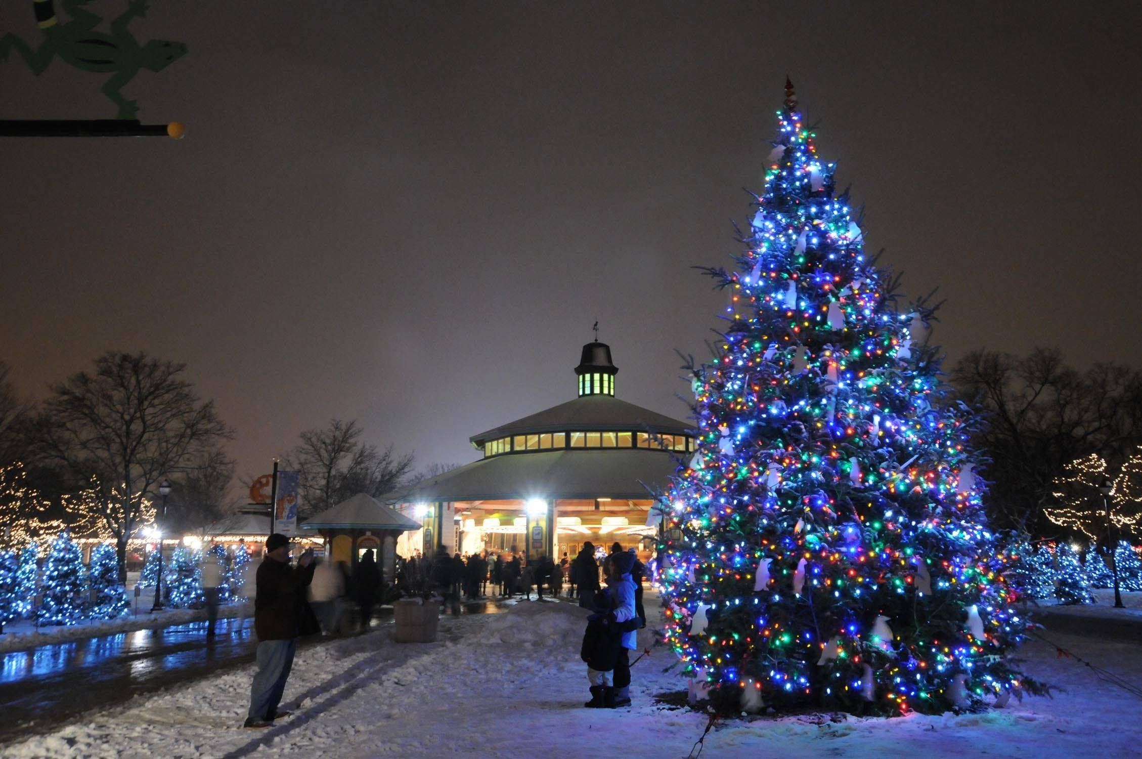 Millions of colorful lights will brighten the night during the annual Holiday Magic celebration at Brookfield Zoo.