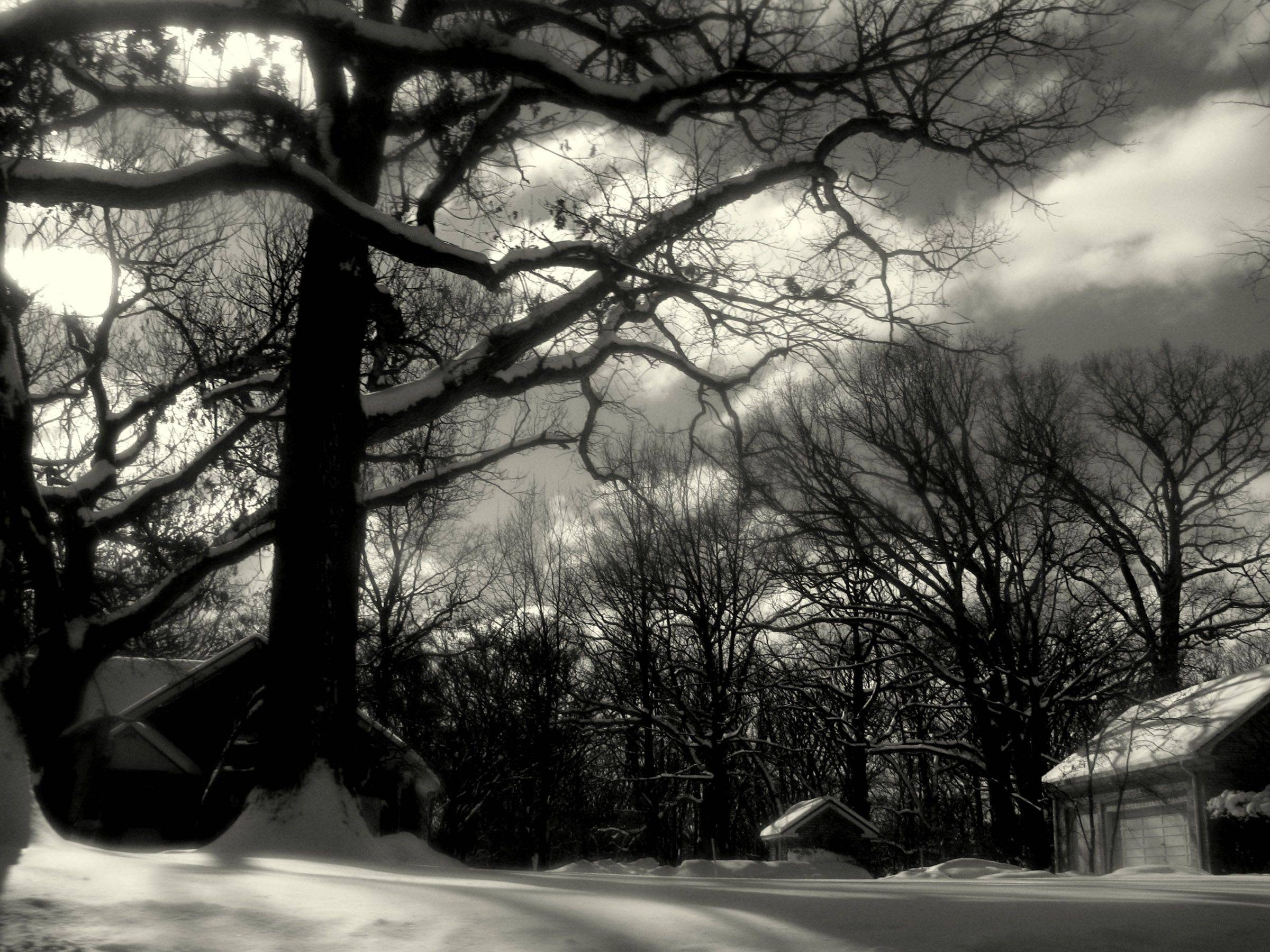This is a winter scene I took from my commute last winter on St. Charles Road to Elmhurst College. I used software to convert the photo to black and white and add the soft focus to give it a surreal quality. I liked the snow-covered branches on these trees and how the trees towered over the tiny houses.