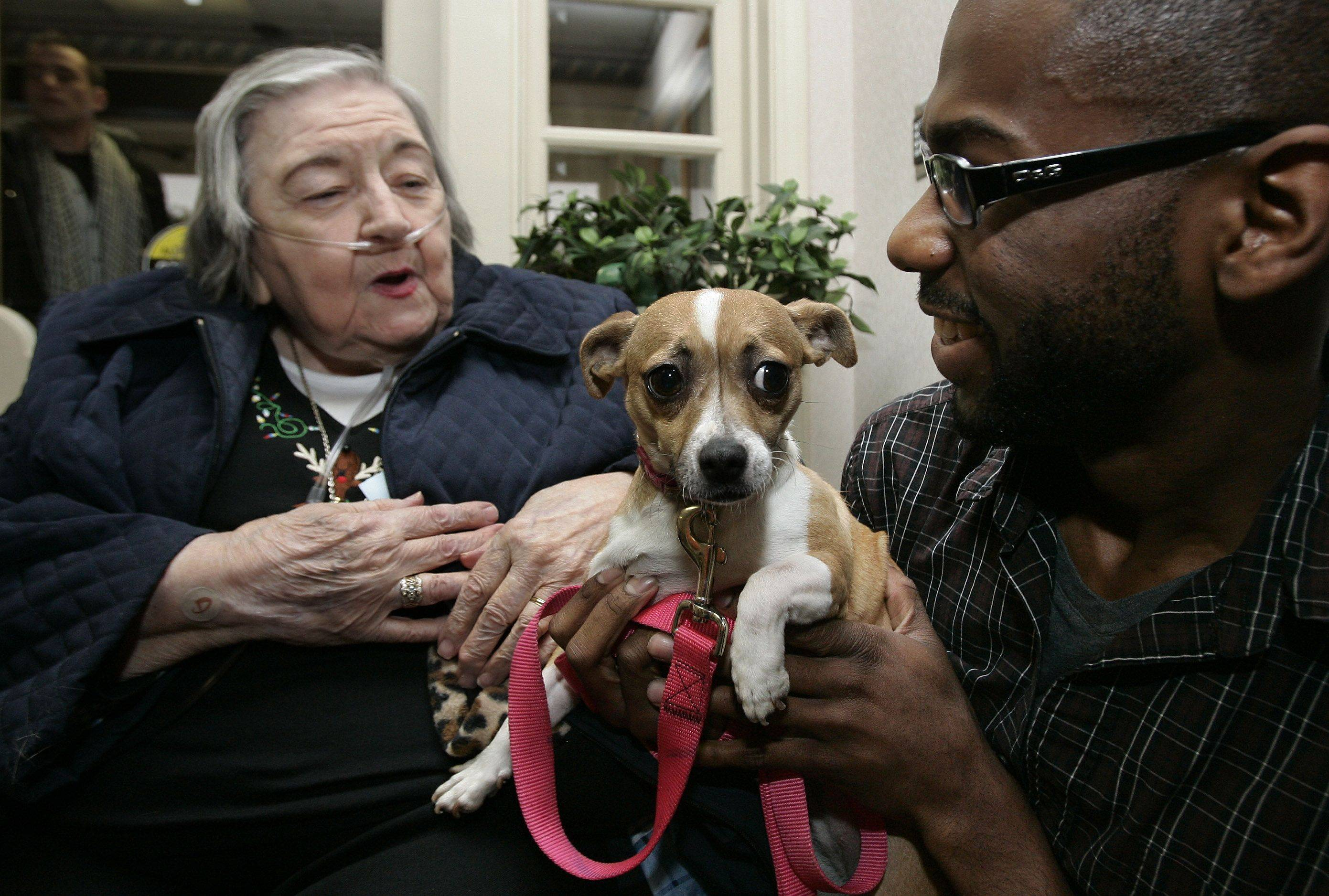 Manor Care resident Cecilia Zemnick pets Binky held by volunteer Corey Brinson of Waukegan Christmas day in Libertyville.