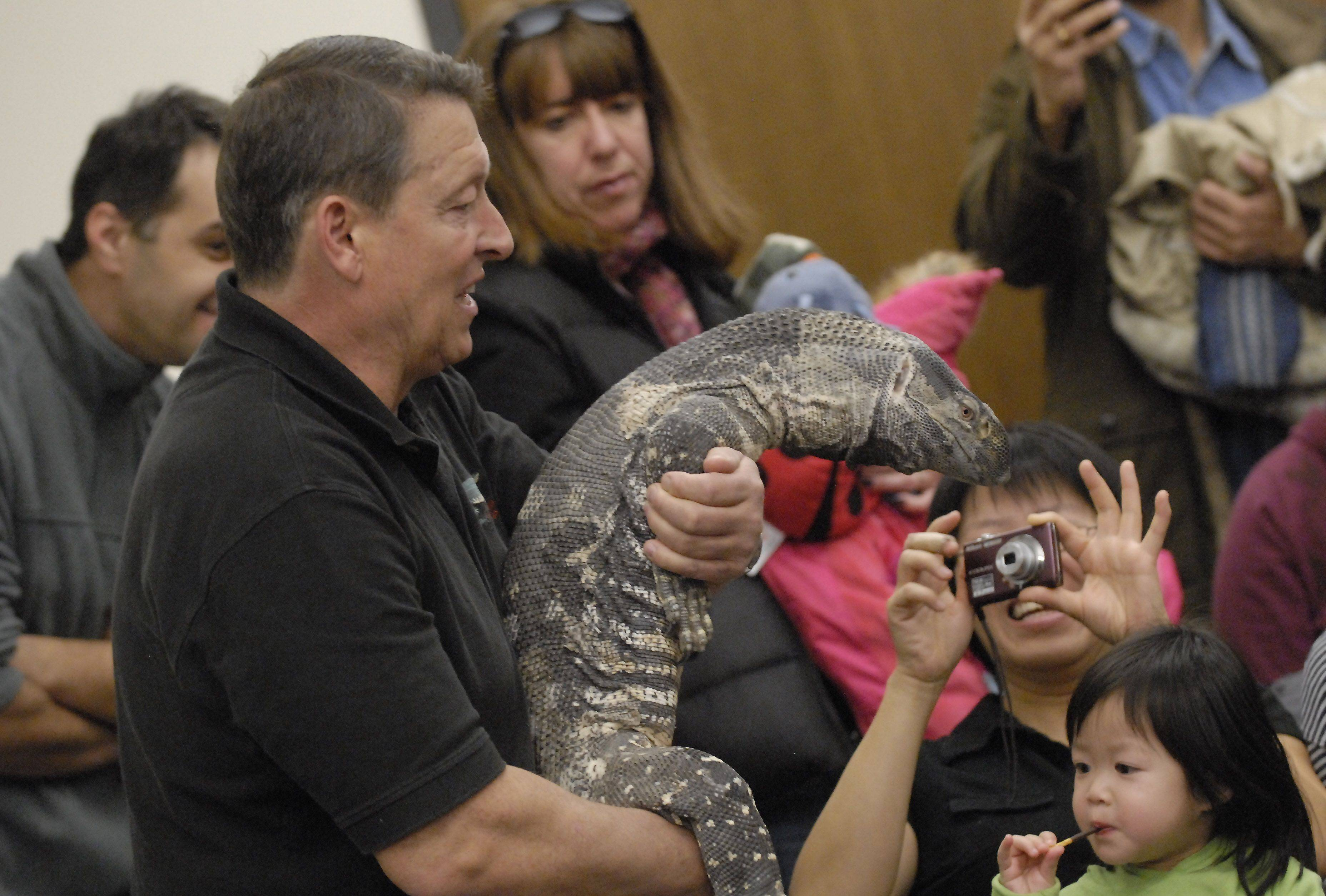 Jim Nesci with Cold Blooded Creatures gave visitors an up close and personal look at this monitor lizard and other reptiles he brought Wednesday to the Indian Trails Public Library in Wheeling.