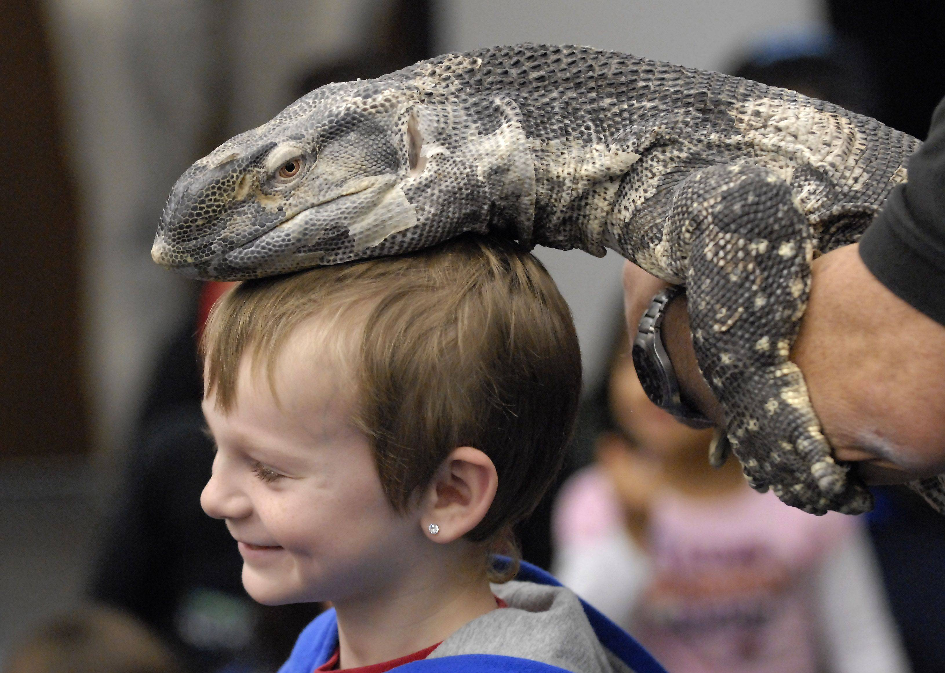 Nathan York, 6, has a black-throated monitor lizard placed on his head during a reptile presentation Wednesday at Indian Trails Public Library in Wheeling.