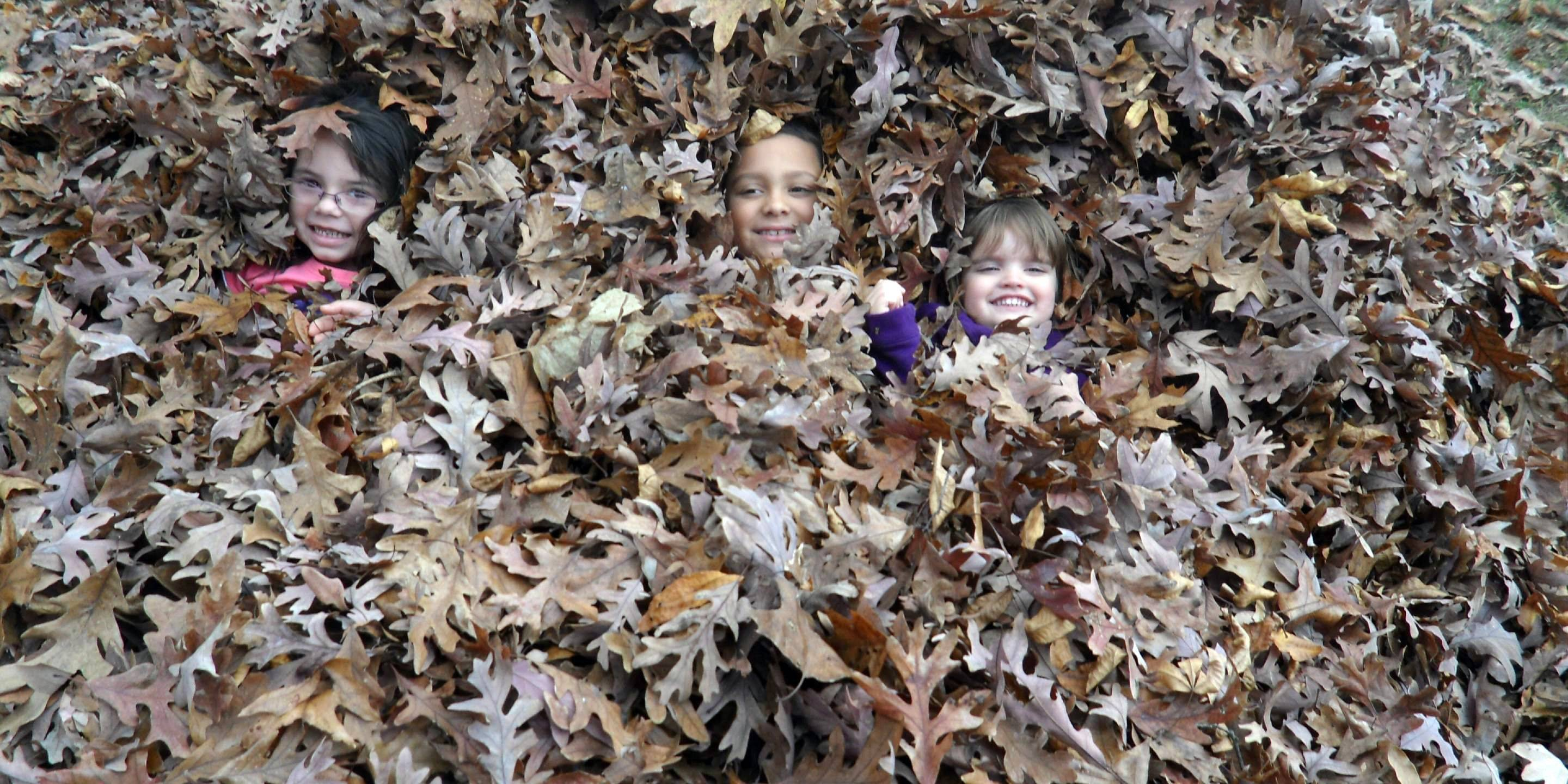 This photo was taken of my oldest three of five grandkids playing and hiding in a large backyard pile of leaves at my daughter's home in Simpsonville, S.C. I took my kids and grandkids from Illinois to visit their sister and her family for Thanksgiving.