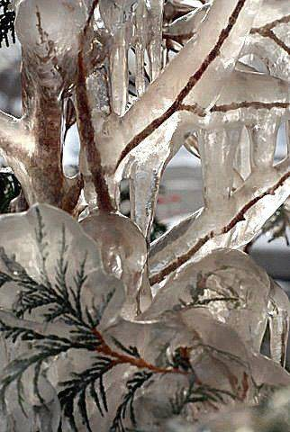 A bush is encased in ice outside a home in Des Plaines after the first hard freeze this year in the beginning of December.